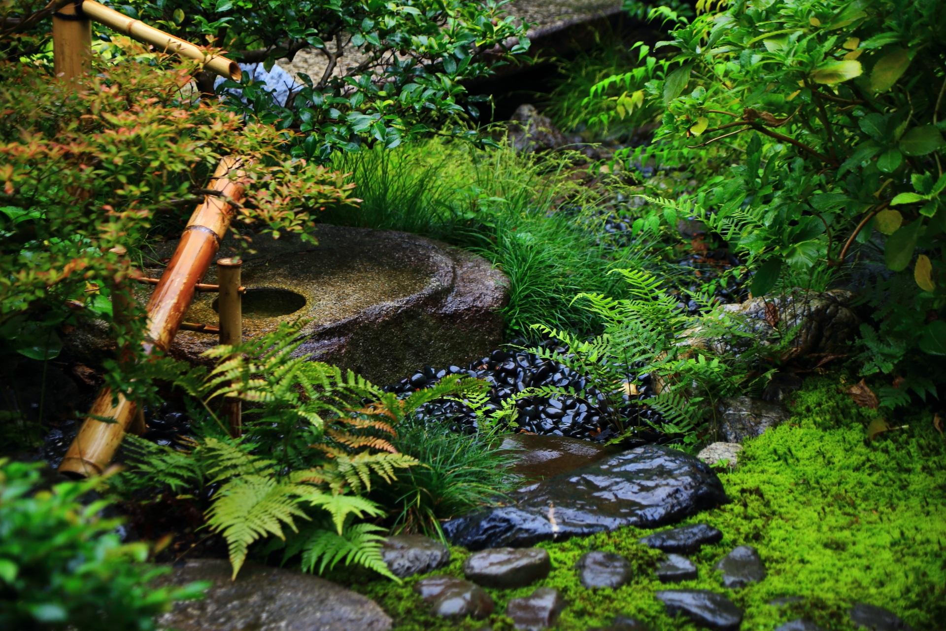 多種多様な緑と獅子脅しの観智院の露地庭