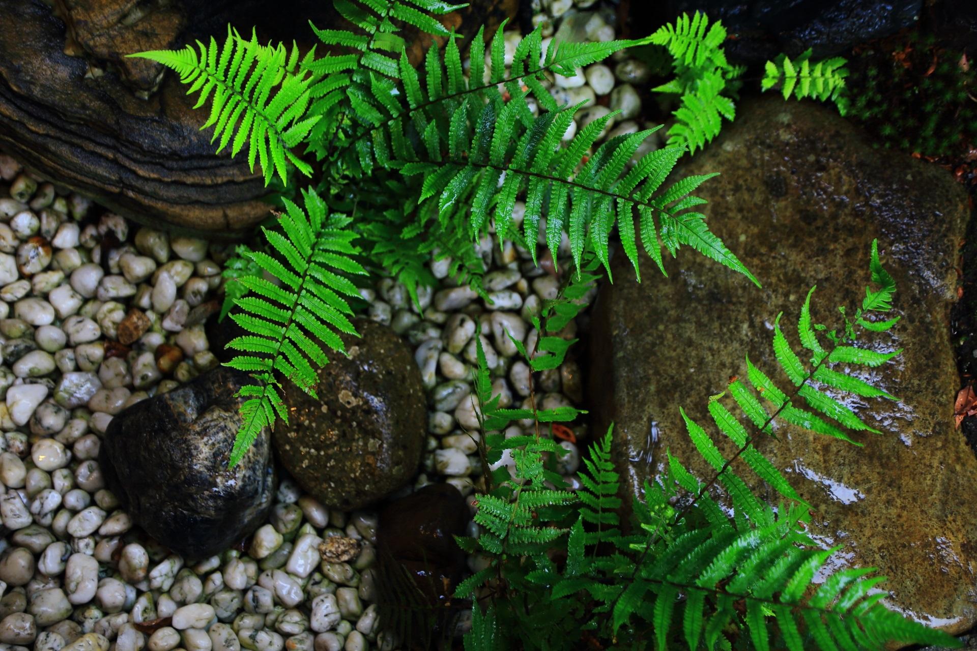 観智院の雨で輝く茶庭の緑