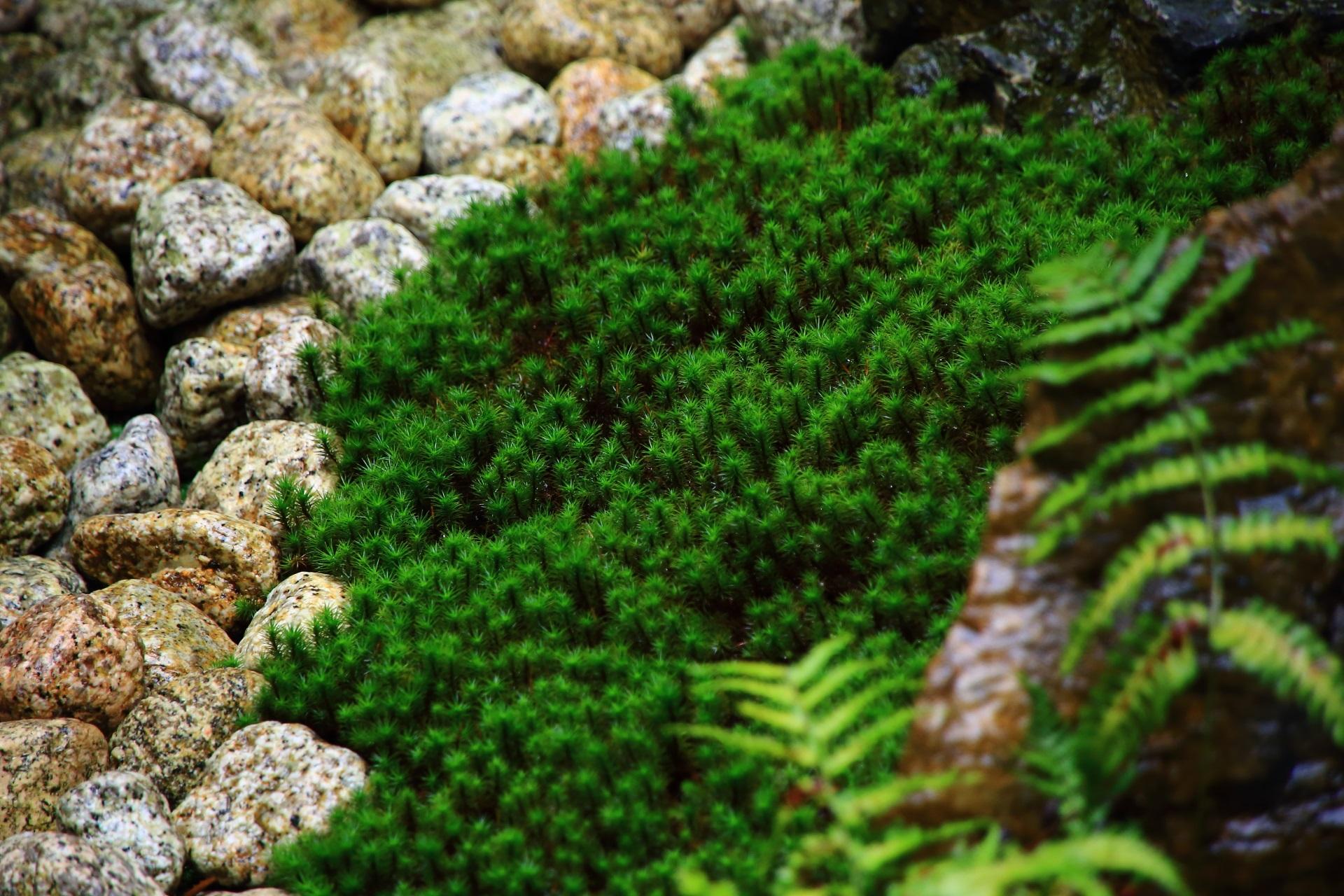緑の苔が綺麗な観智院の中庭