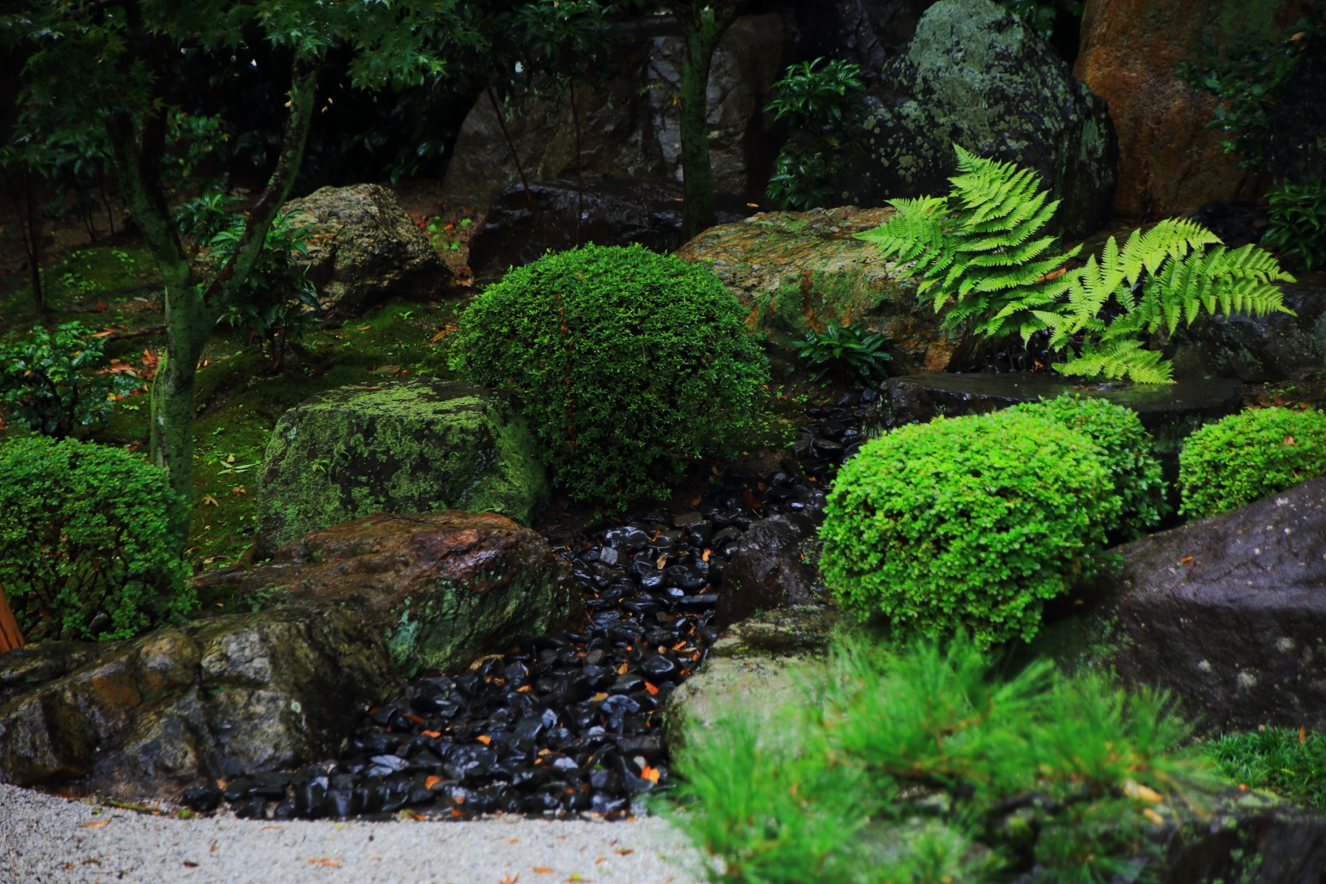 御香宮神社庭園のサツキやシダなどの緑