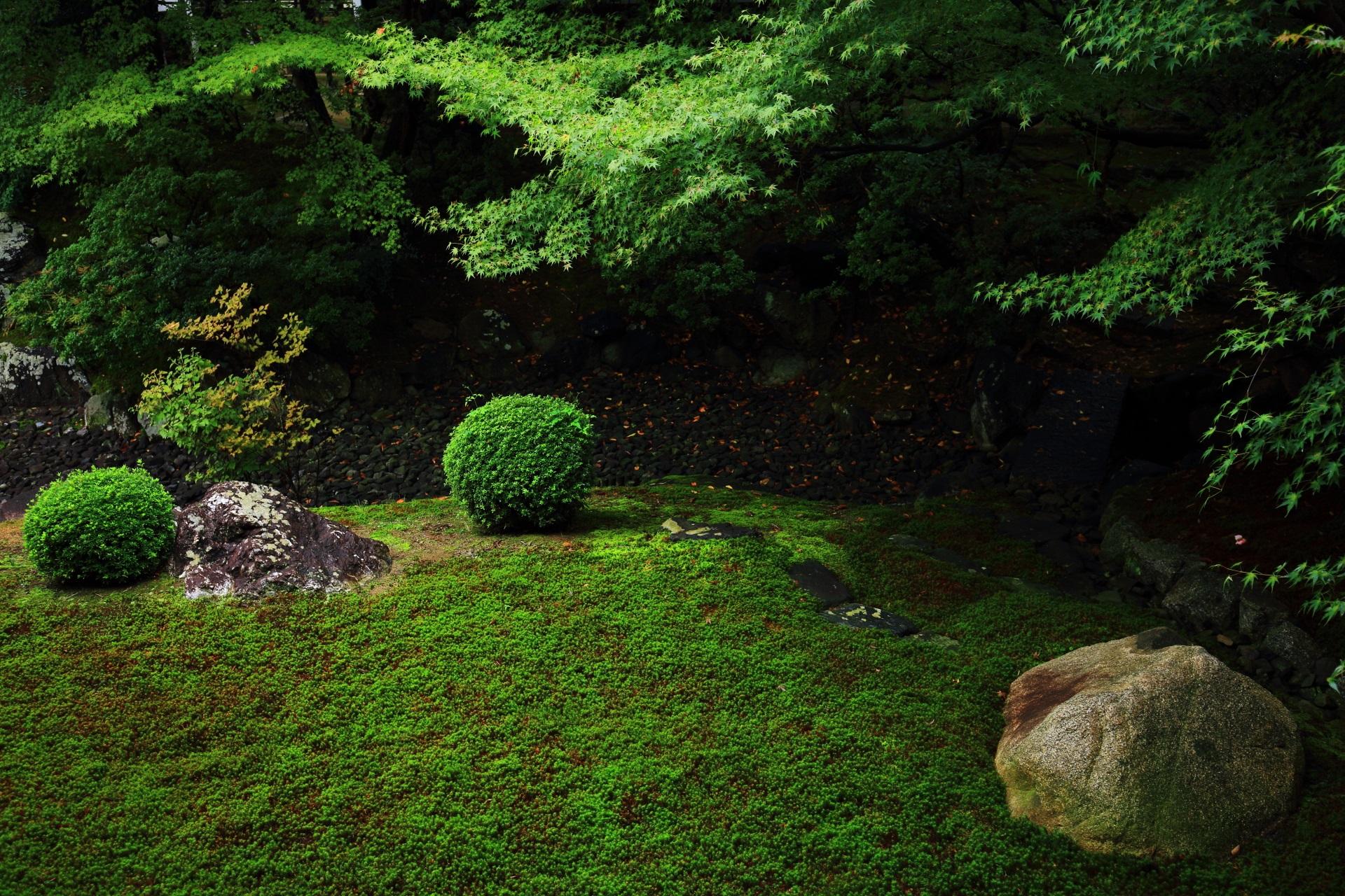 多種多様な緑が綺麗な裏方丈庭園