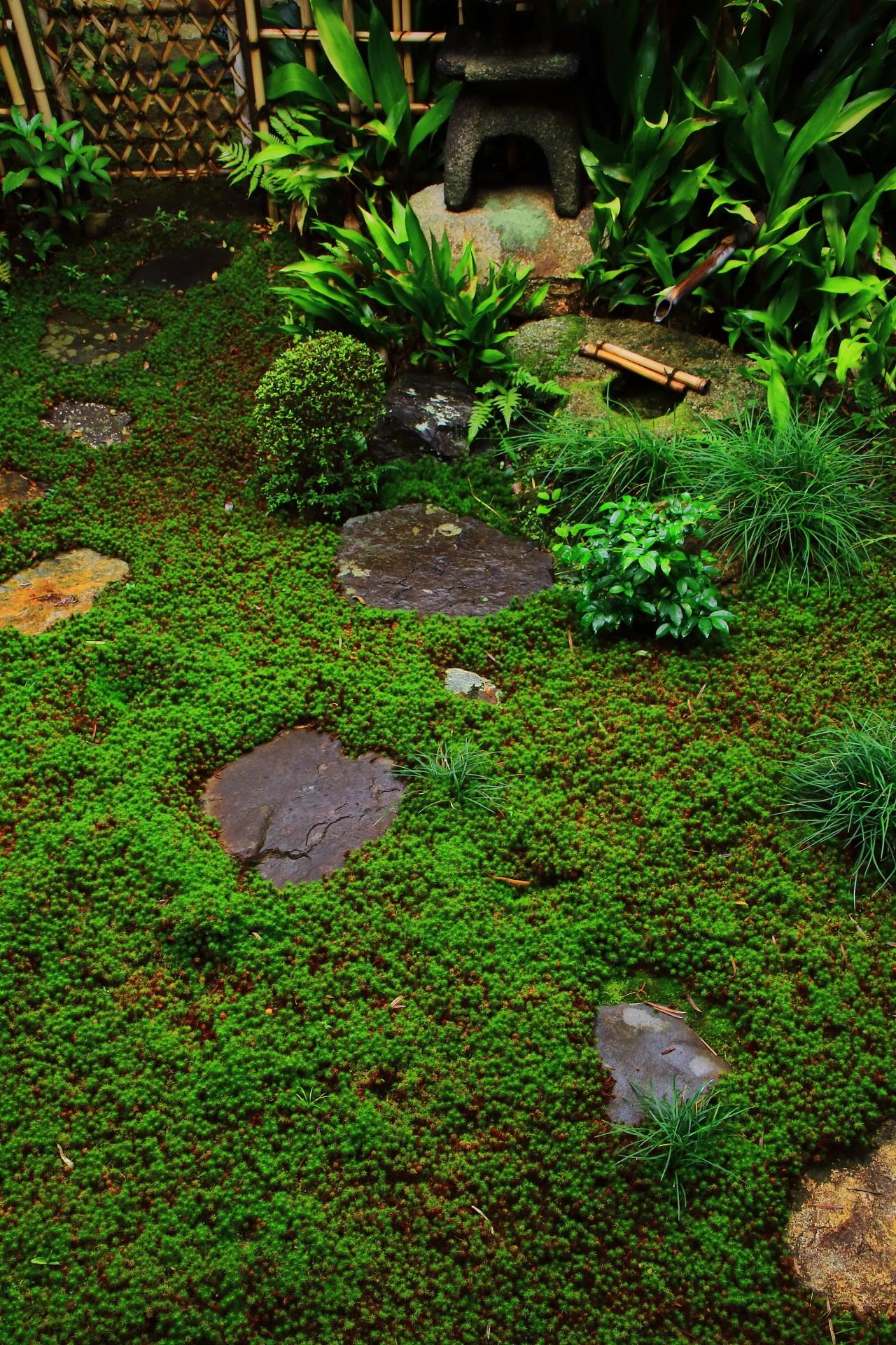 苔と飛び石の美しい芬陀院の茶庭