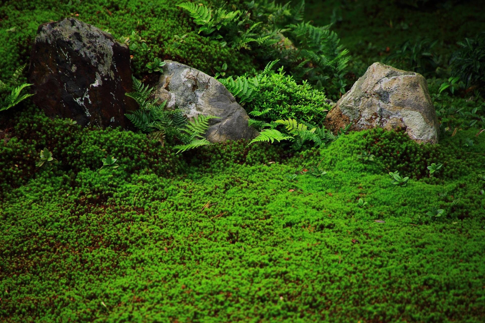 芬陀院庭園の緑の苔やシダ