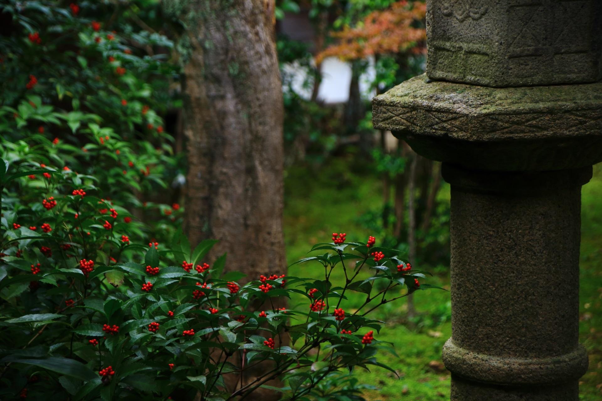 露地庭の灯籠と赤い千両の実