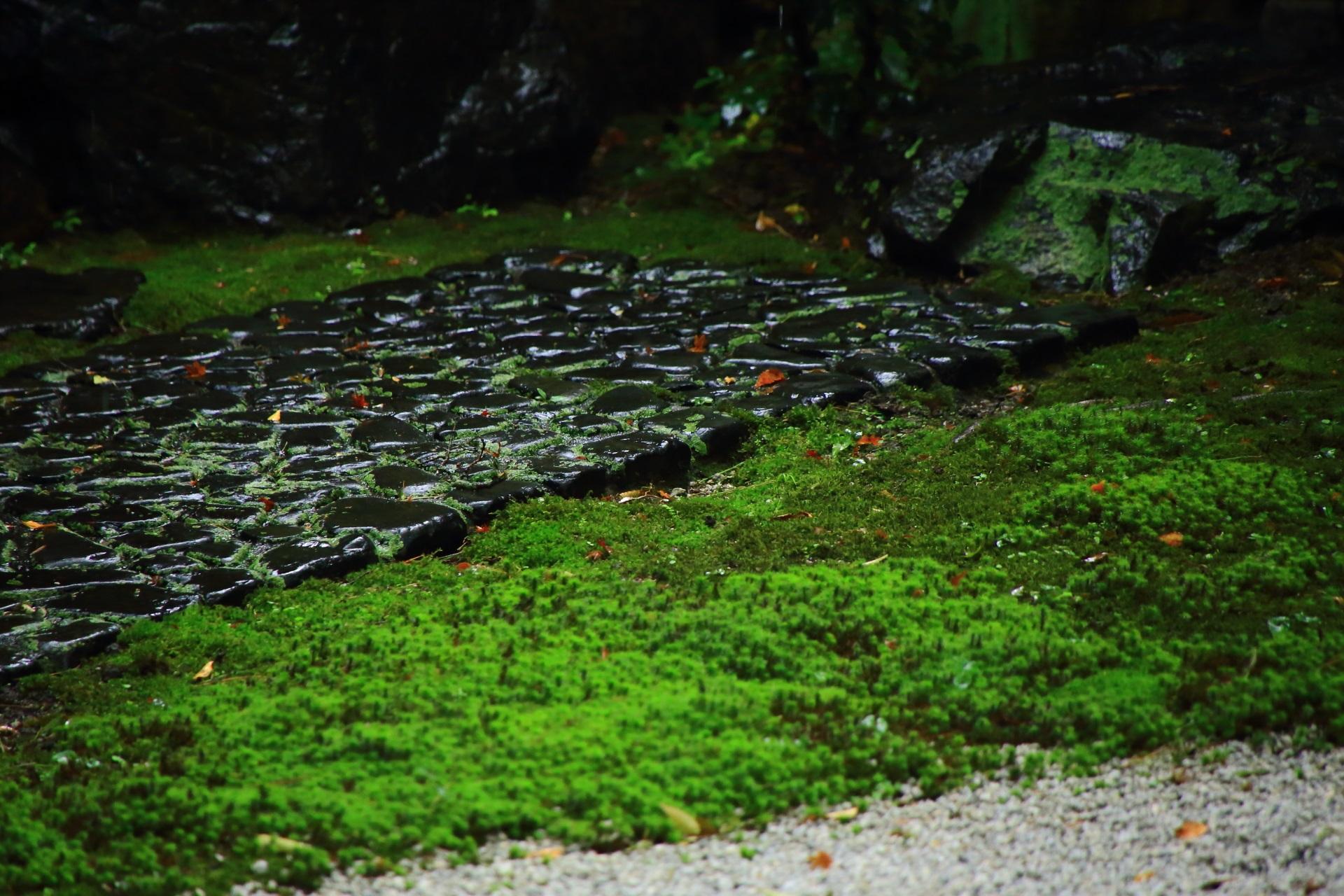 雨に濡れた美しい苔と石畳