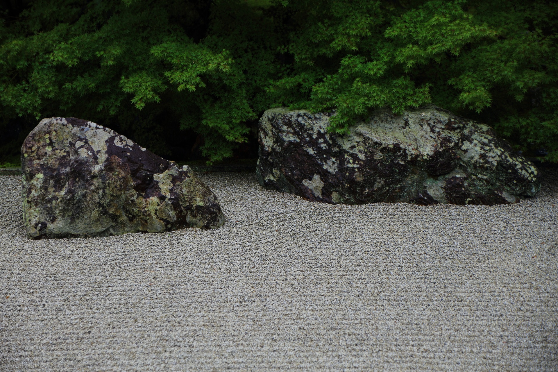 相国寺開山堂庭園の岩と砂と青もみじ