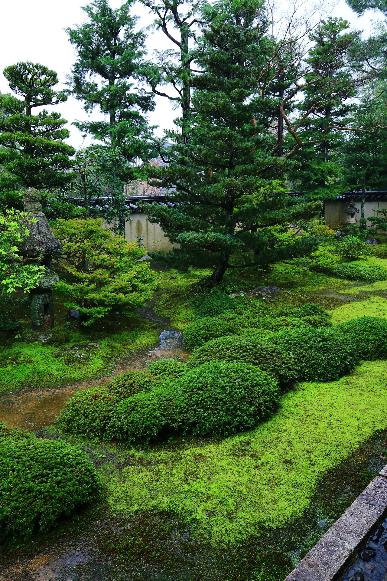A garden colored with green of the Daioin-House in Myoshinji-Temple in Kyoto,Japan