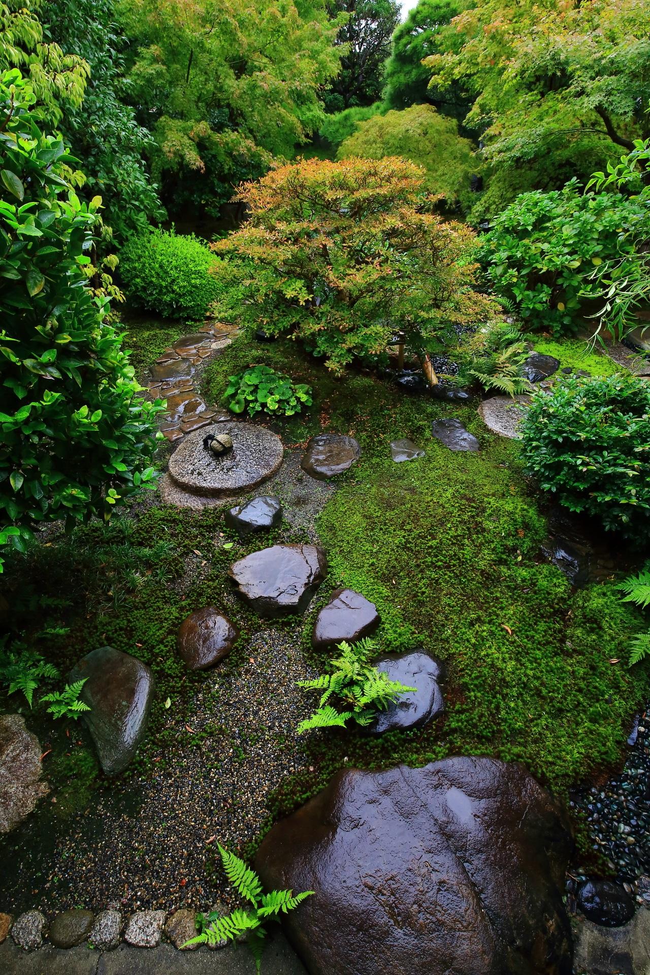 飛び石と豊富な緑が美しい露地庭