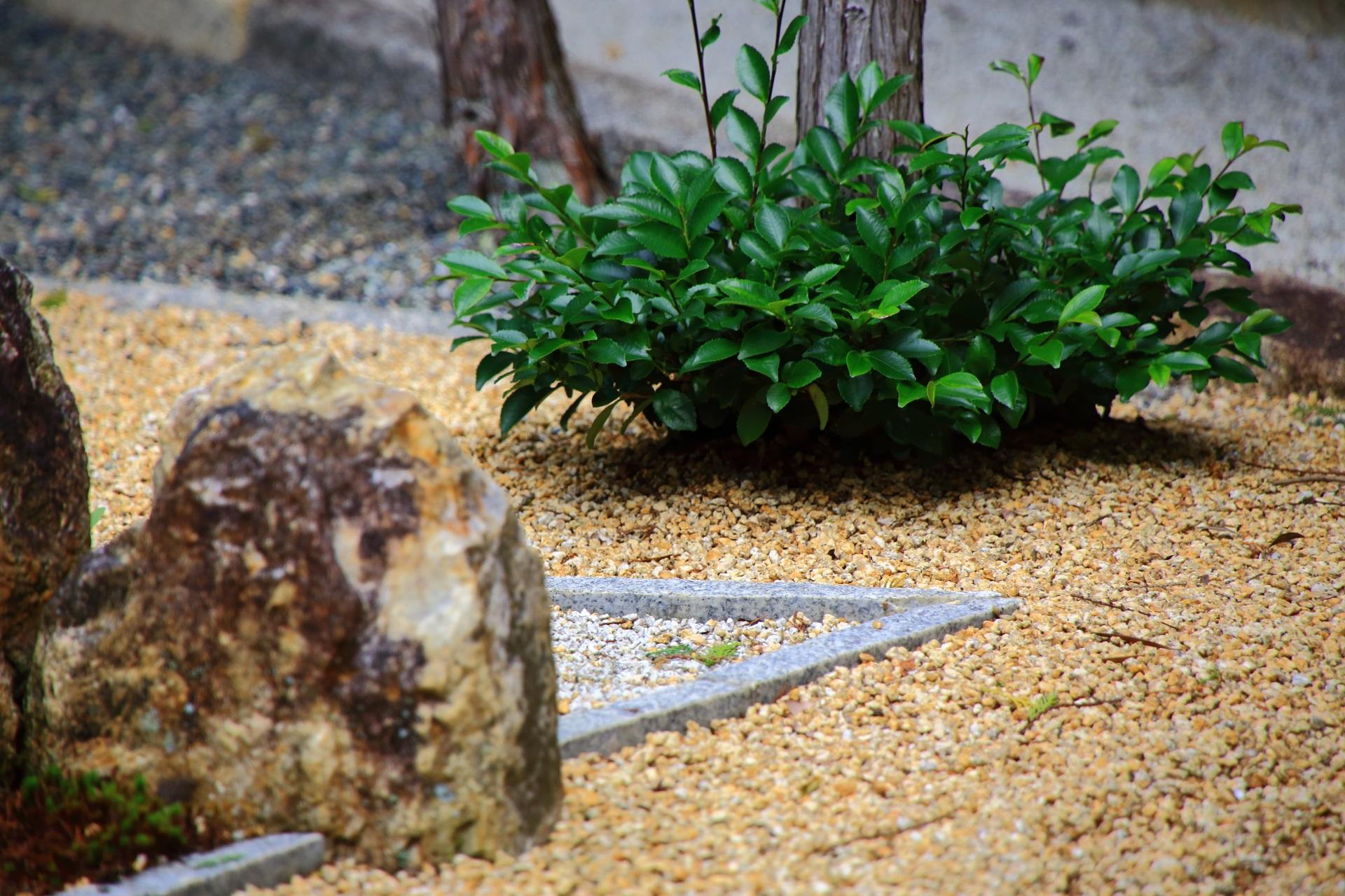 綺麗な緑も植えられた随縁の庭