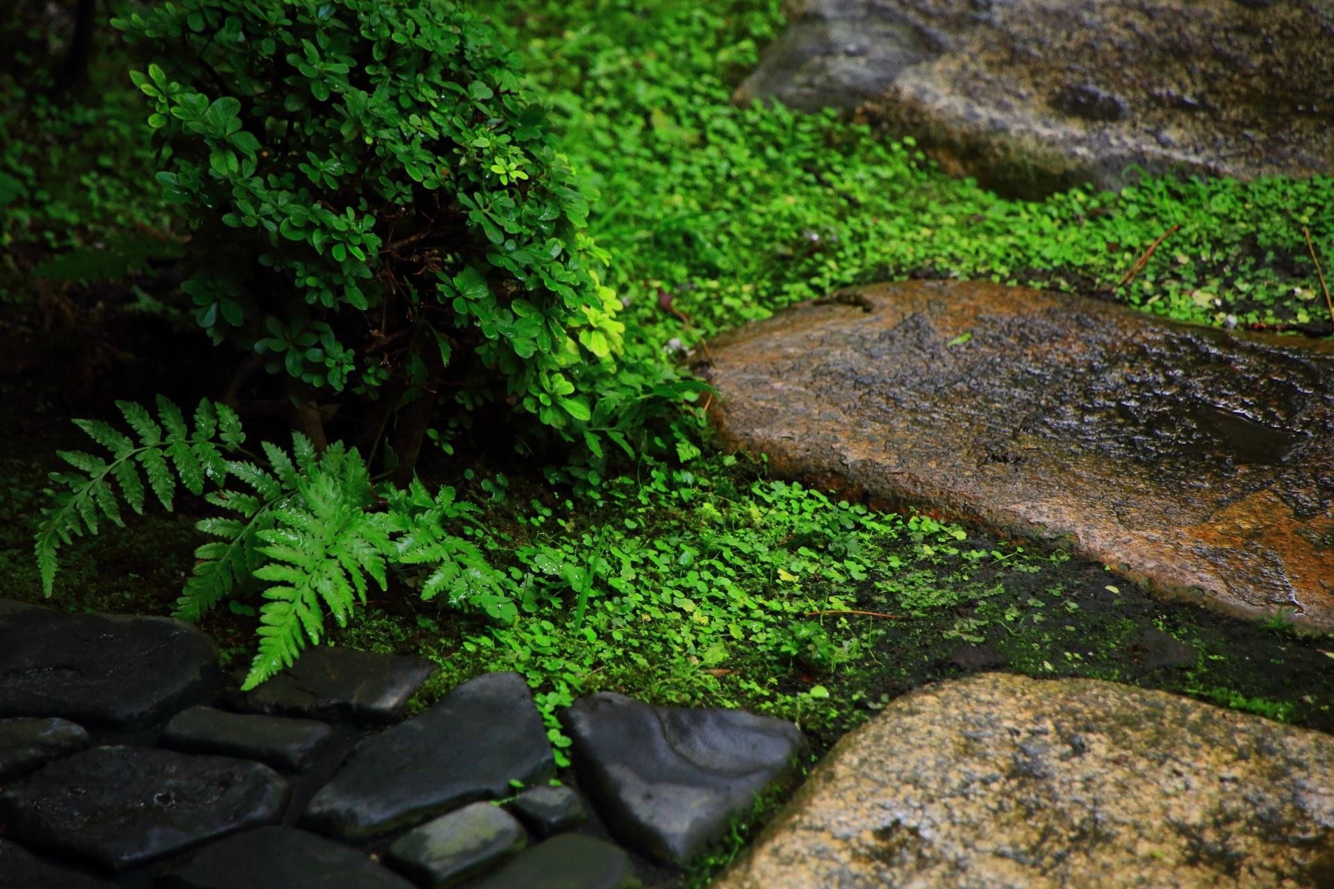 雨で潤った島原の角屋の庭園