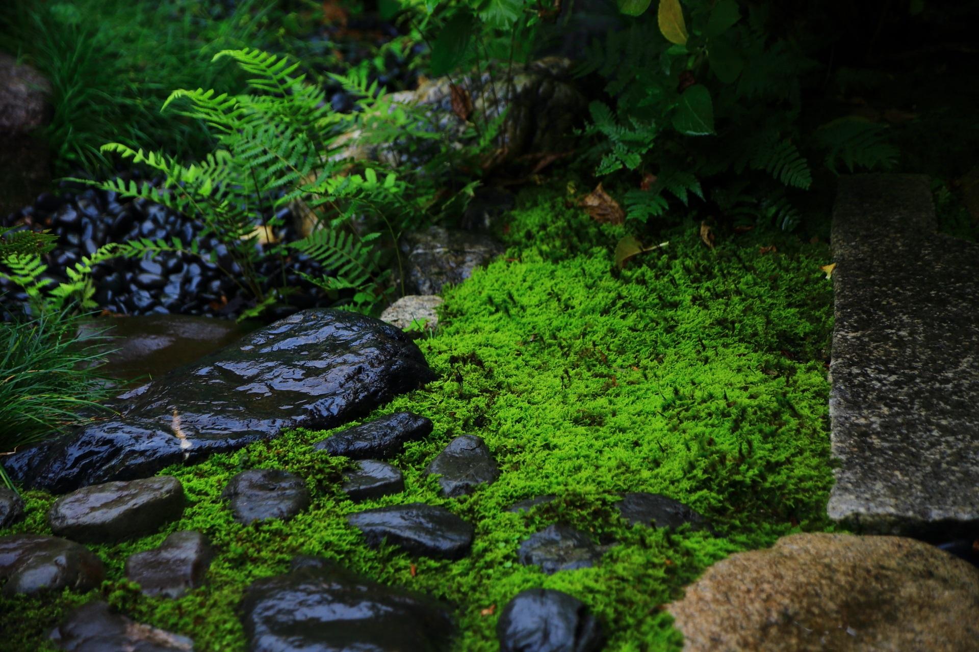 観智院の露地庭の淡い緑の苔と飛び石