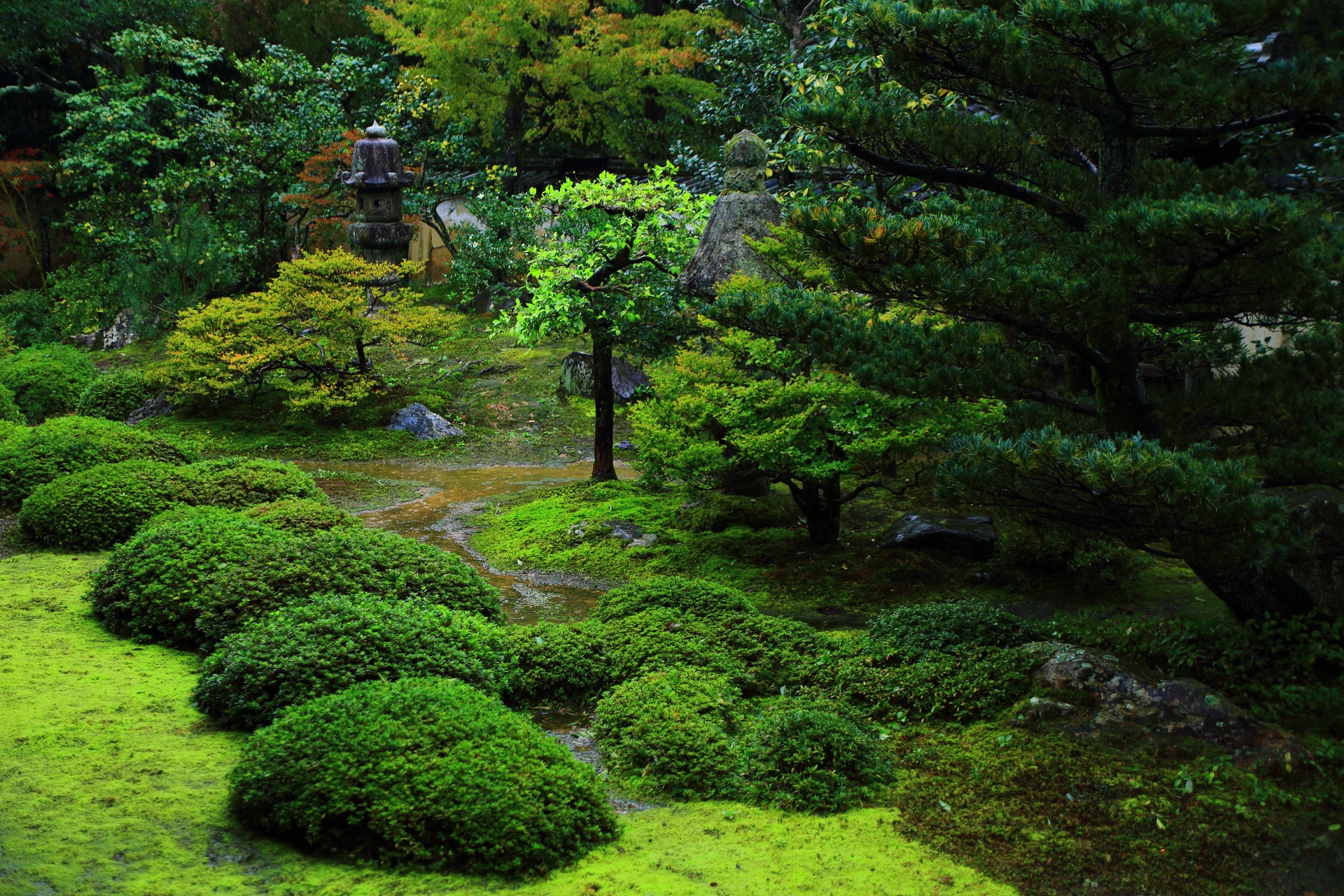 大雄院のモコモコした感じのボリュームある庭園