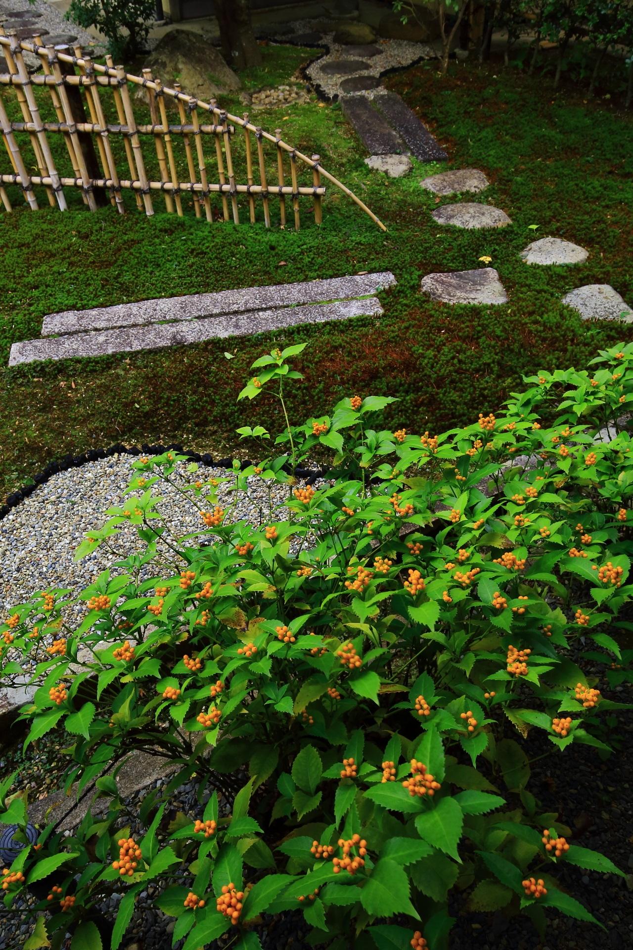 華やかな黄色い千両の実に彩られた真如堂の露地庭