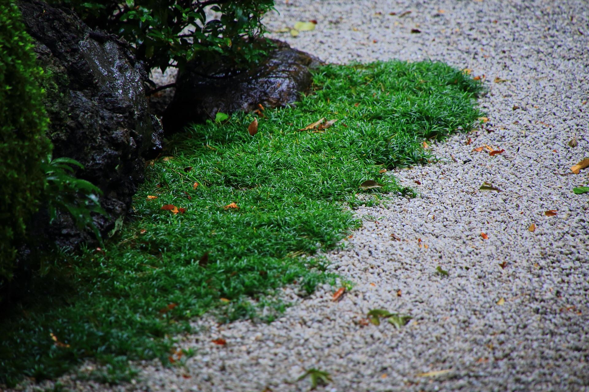 緑と白砂のコントラスト