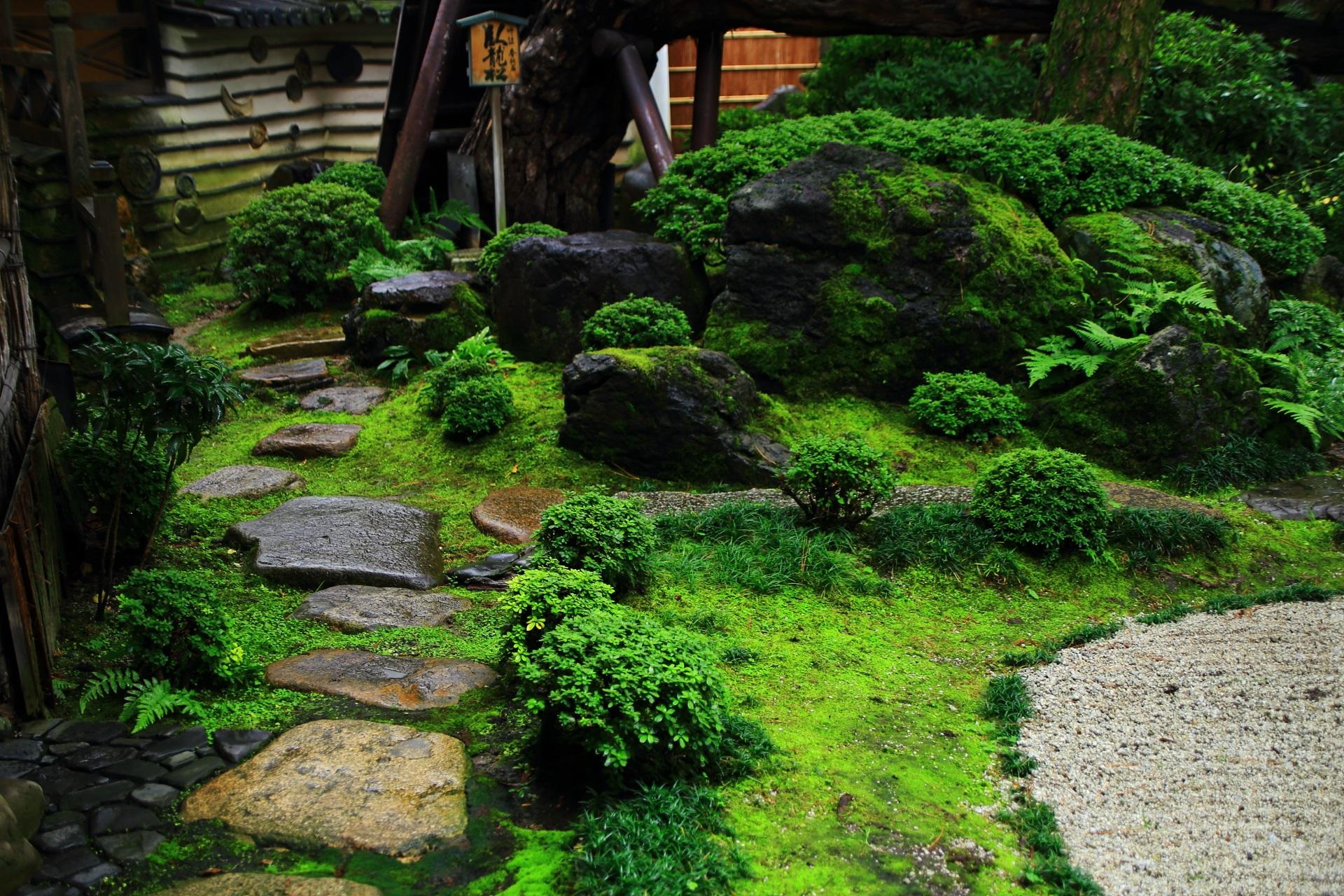 緑が豊富で癒される角屋の臥龍松の庭