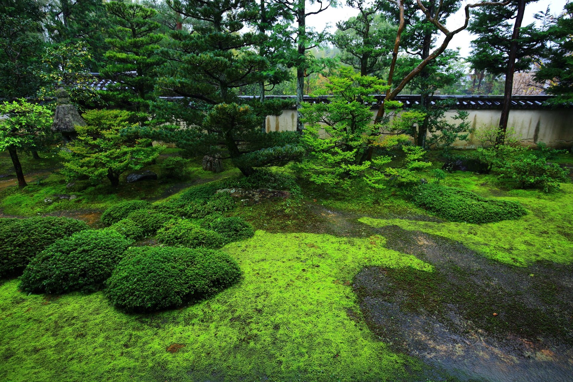 砂苔と杉苔の二色の苔の大雄院庭園