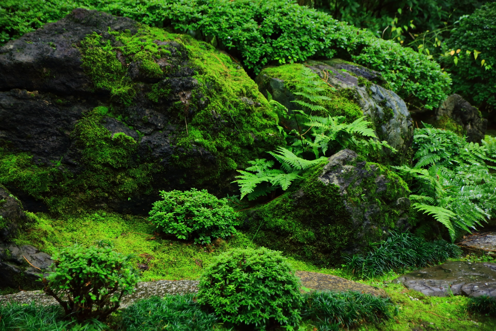 角屋の庭園の鮮やかな緑