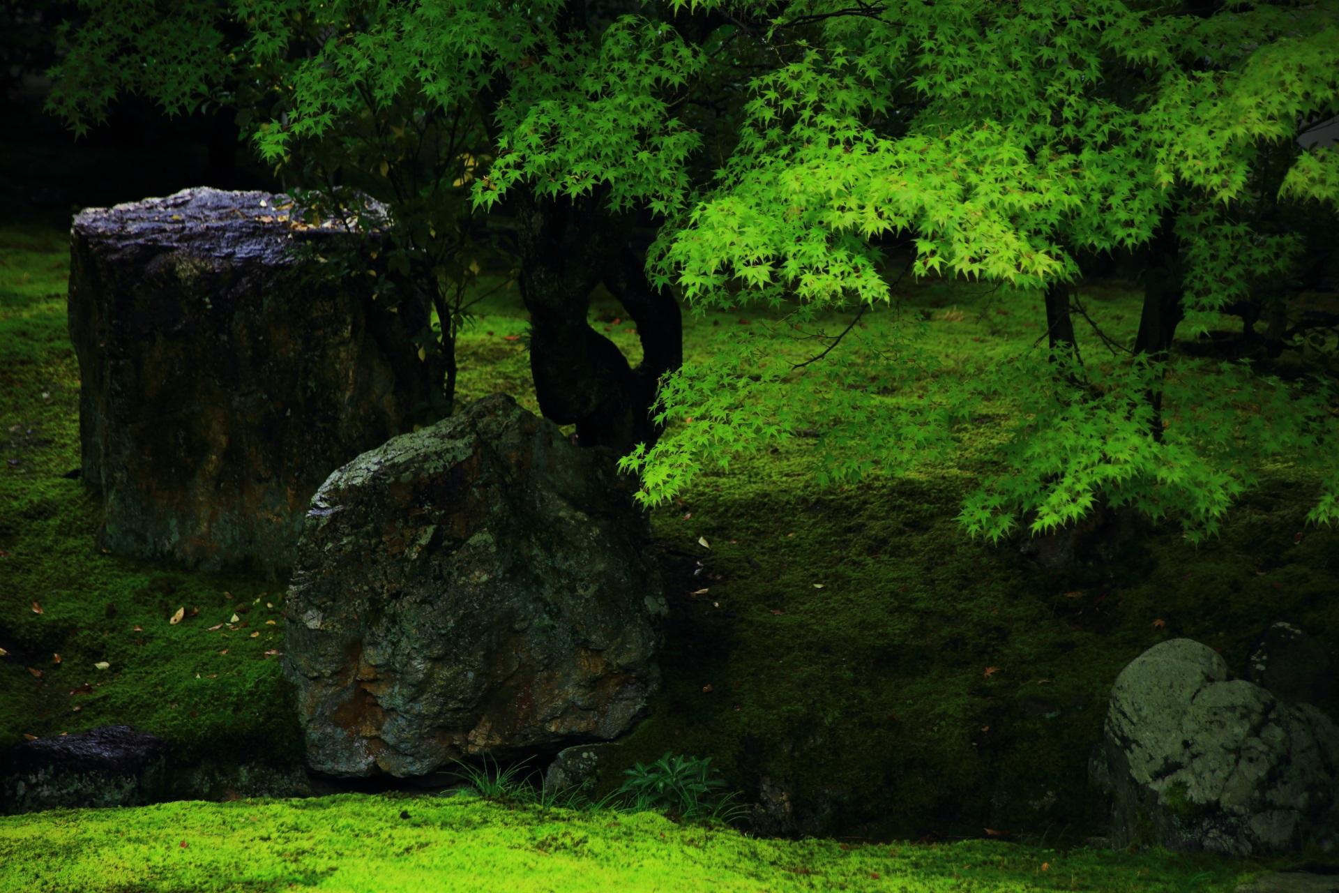 青もみじと岩が美しい相国寺の開山堂庭園