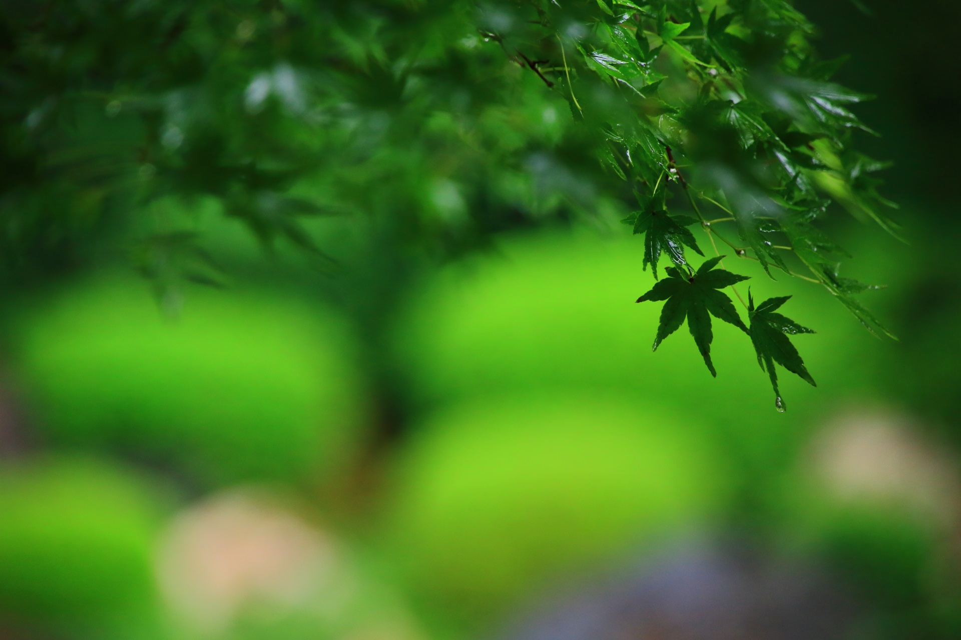 青もみじの美しい御香宮神社の庭園