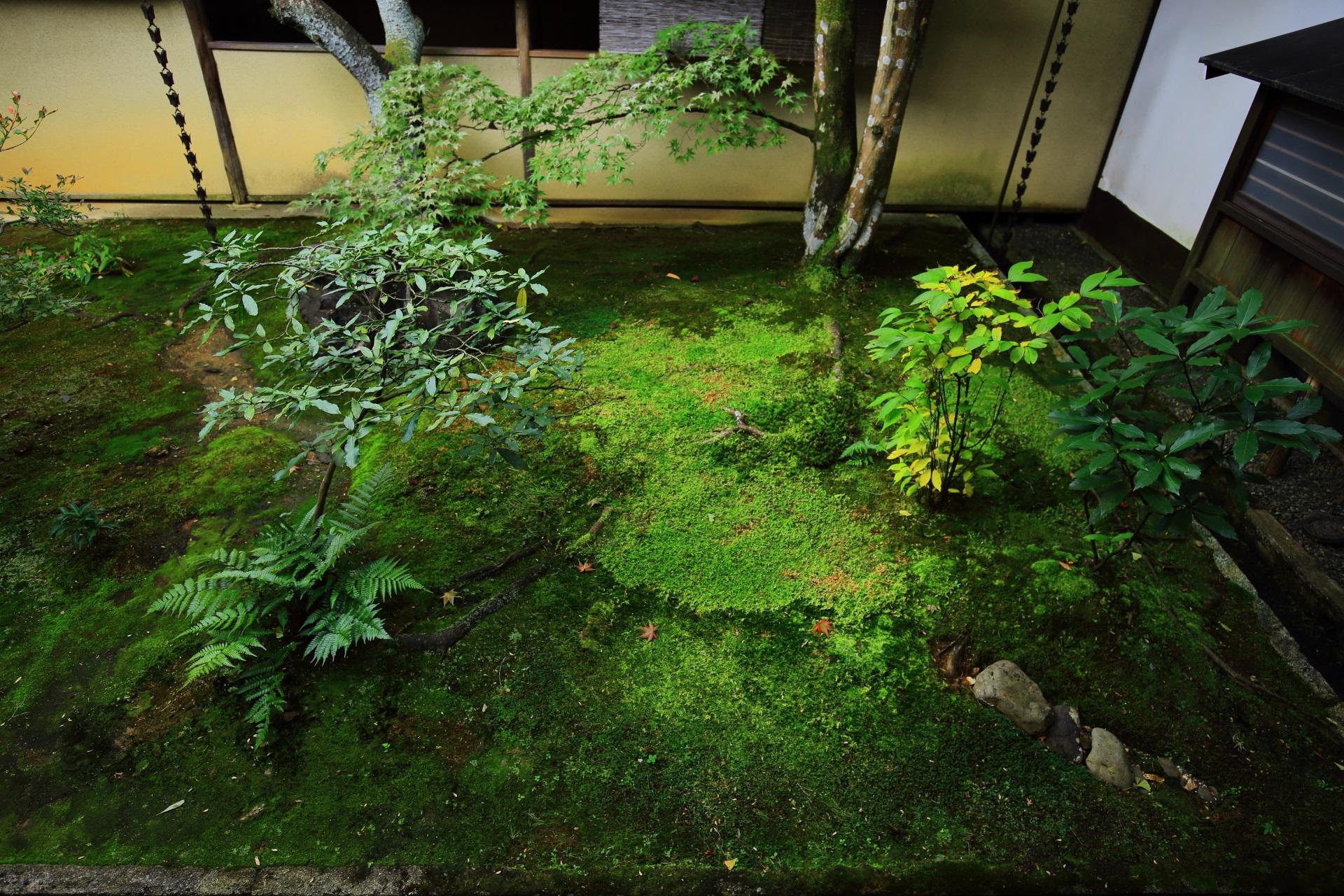 苔に多種の植物が植えられた露地庭