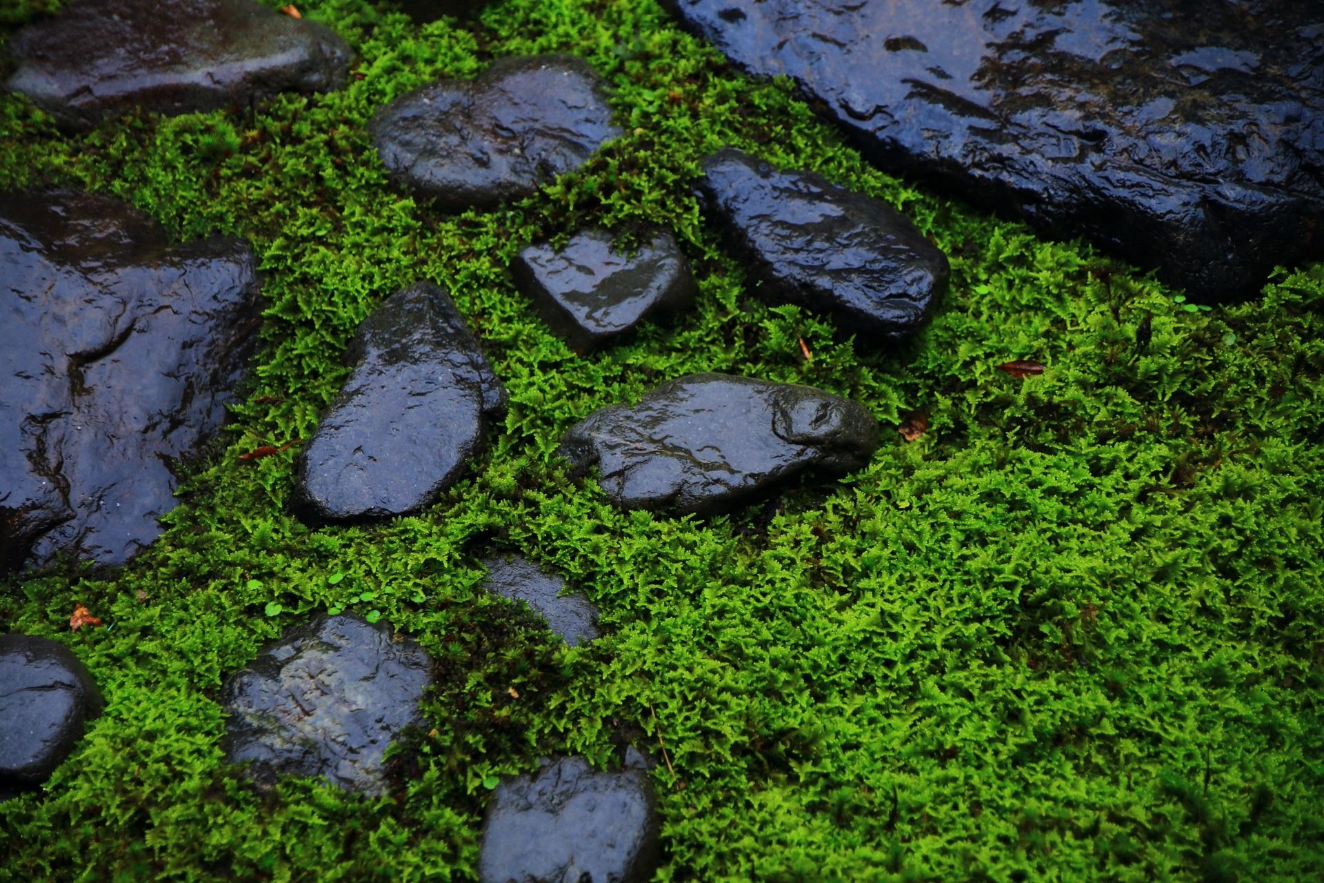 雨に濡れて美しい苔と岩
