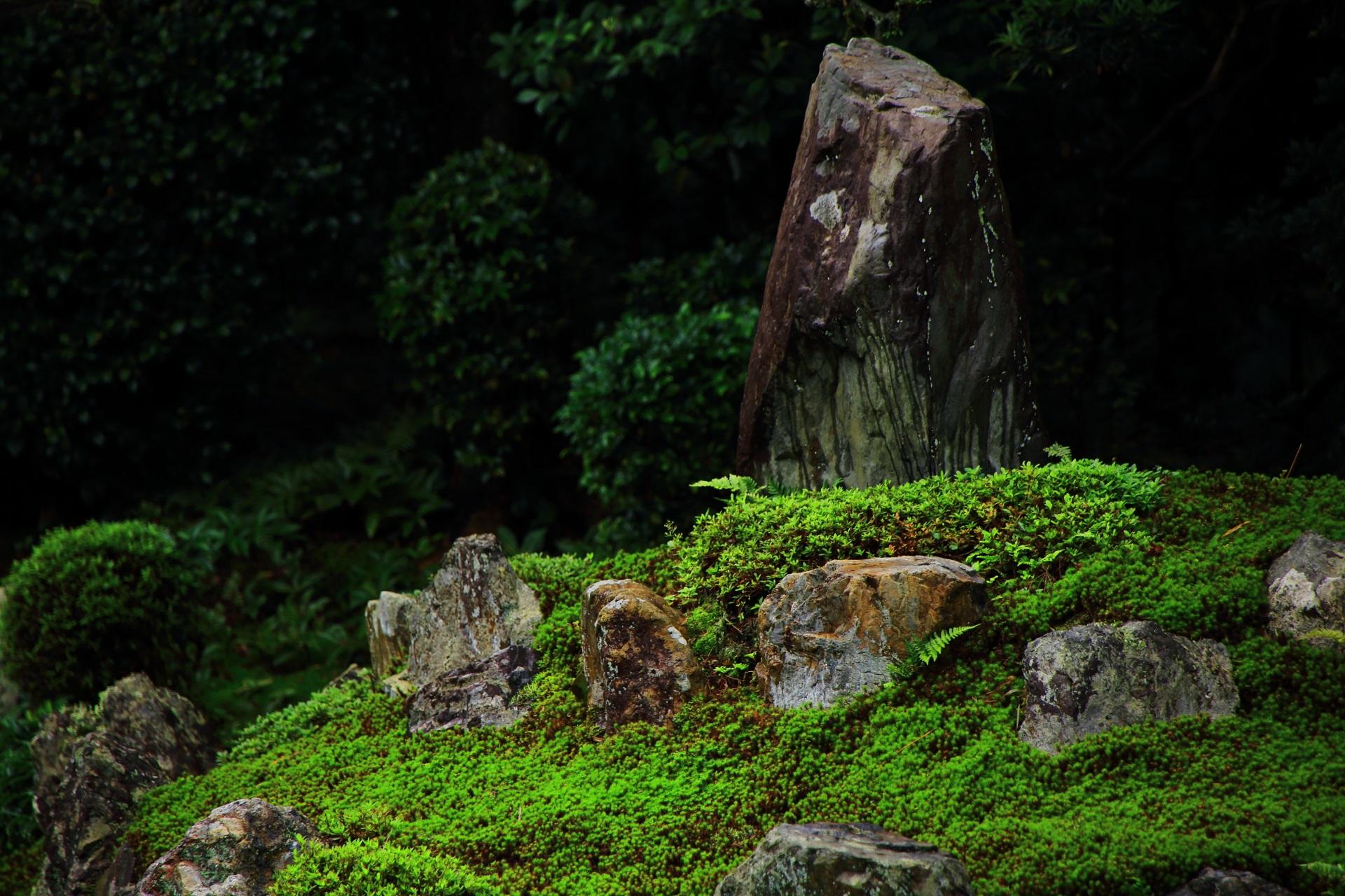 芬陀院の亀島の岩や苔