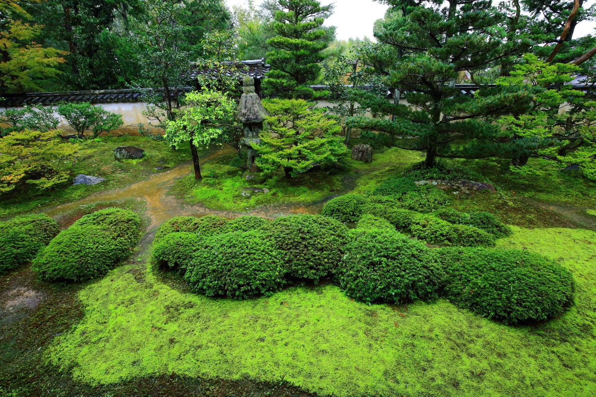 緑の苔とサツキの刈り込みが綺麗な大雄院の庭園