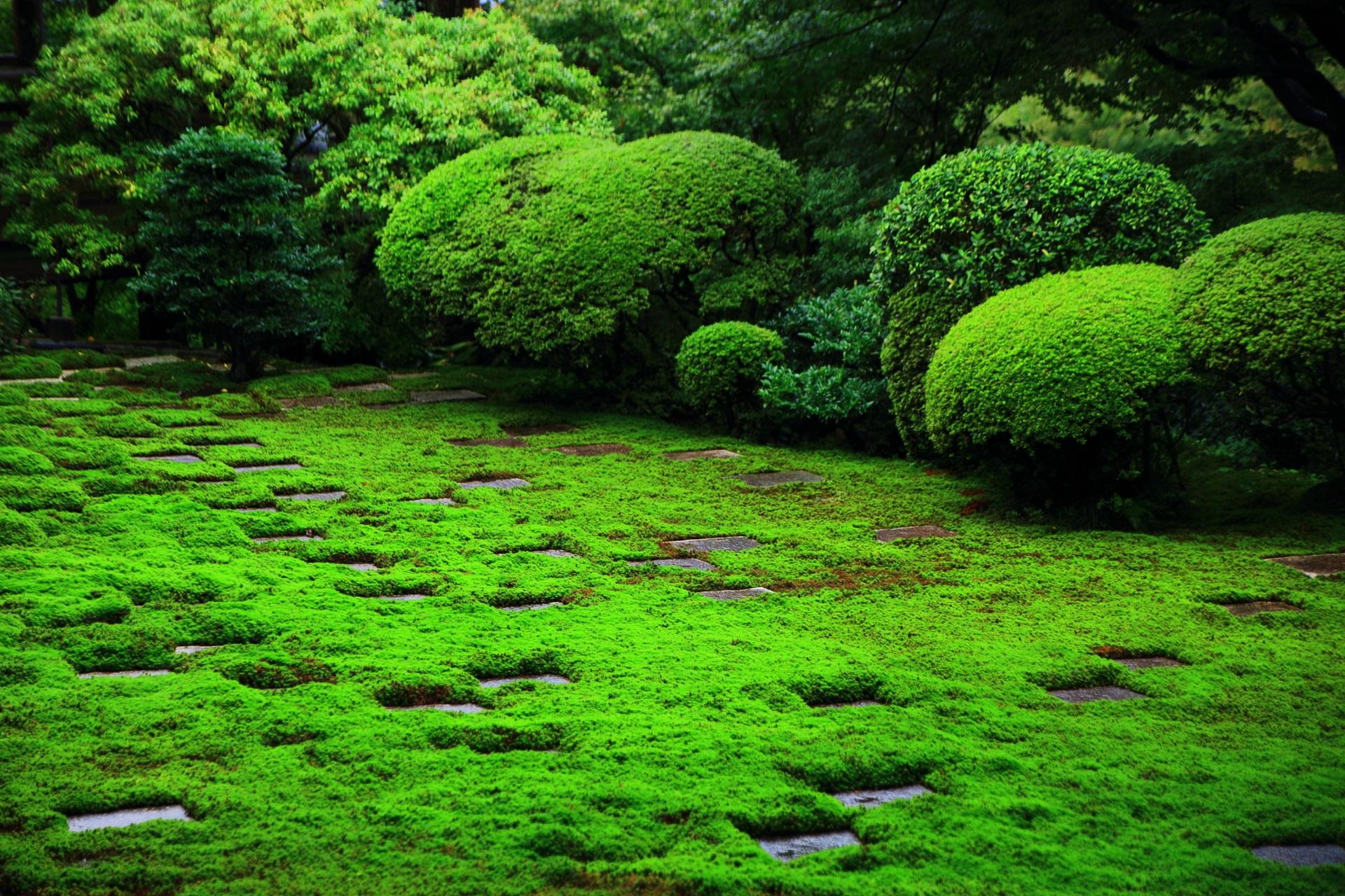 緑の苔やサツキの美しい方丈北庭