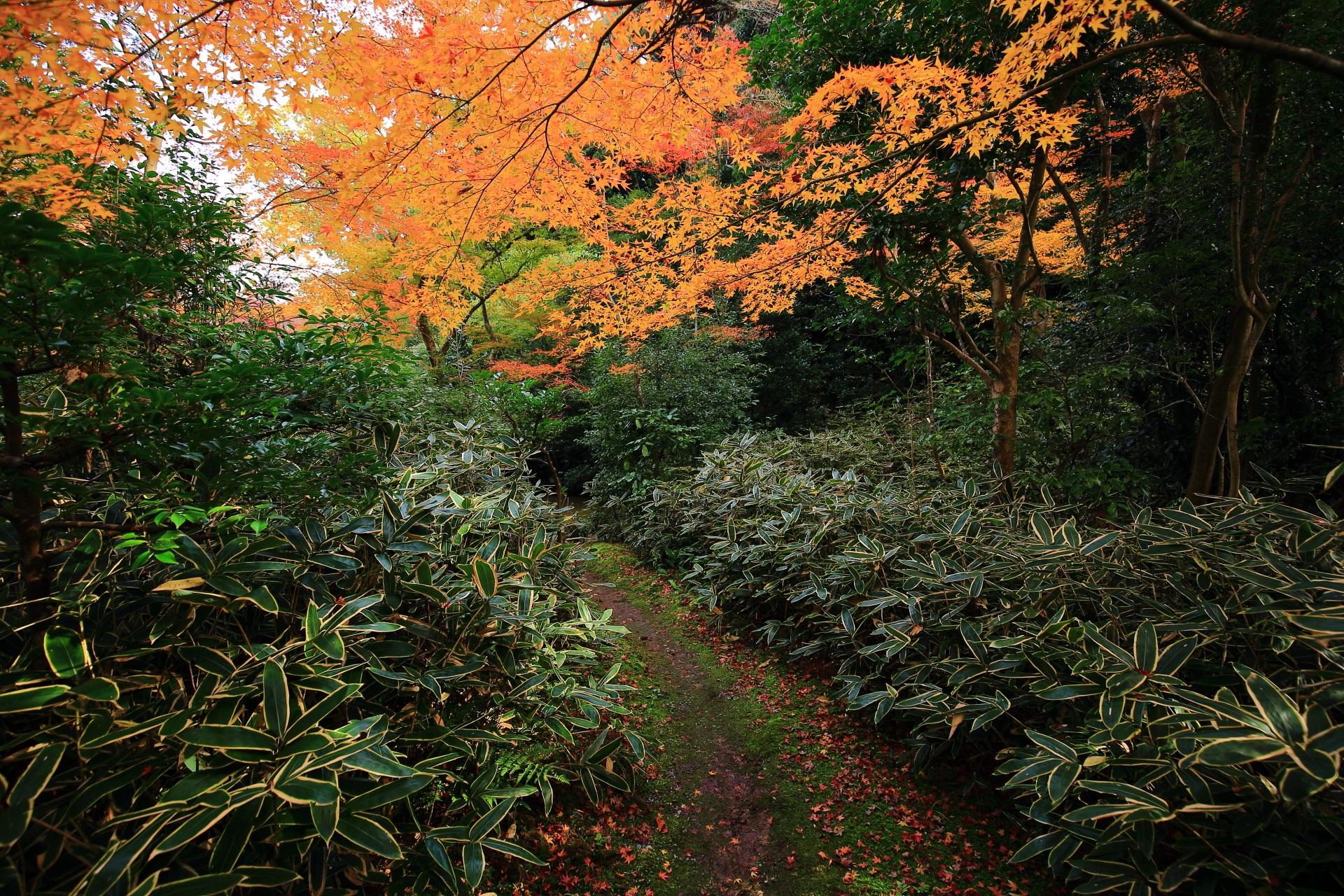 含翆庭の華やかな紅葉に彩られる苔や笹につつまれる参道