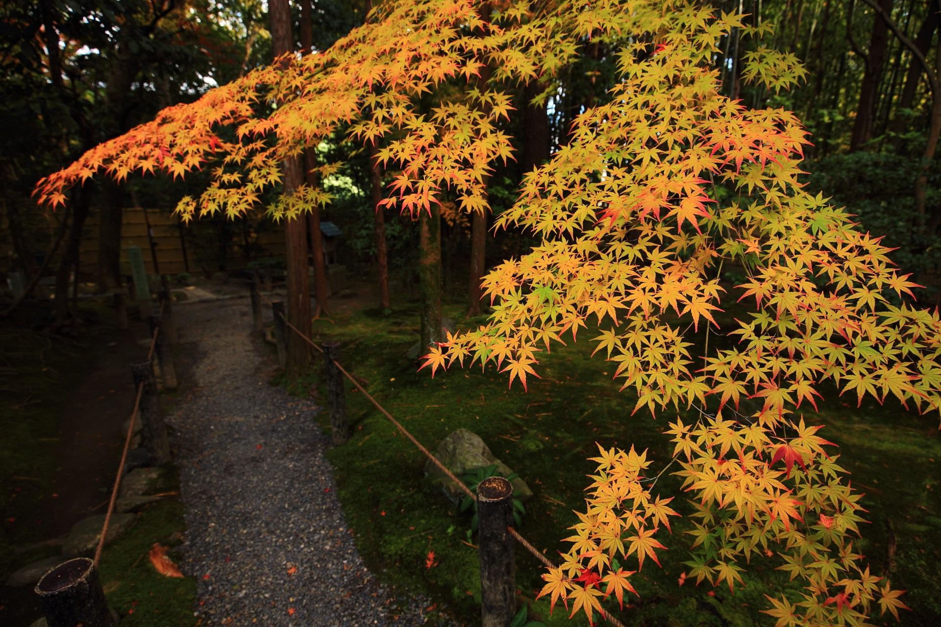 桂春院の落ち着いた庭園を彩る見事なオレンジや黄色の紅葉
