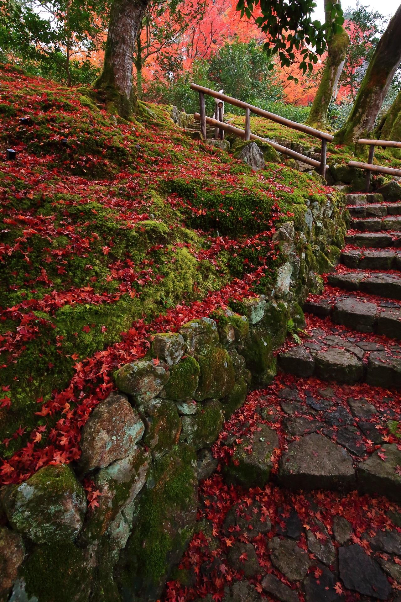 歩くのも気が引ける極上の散もみじの石段