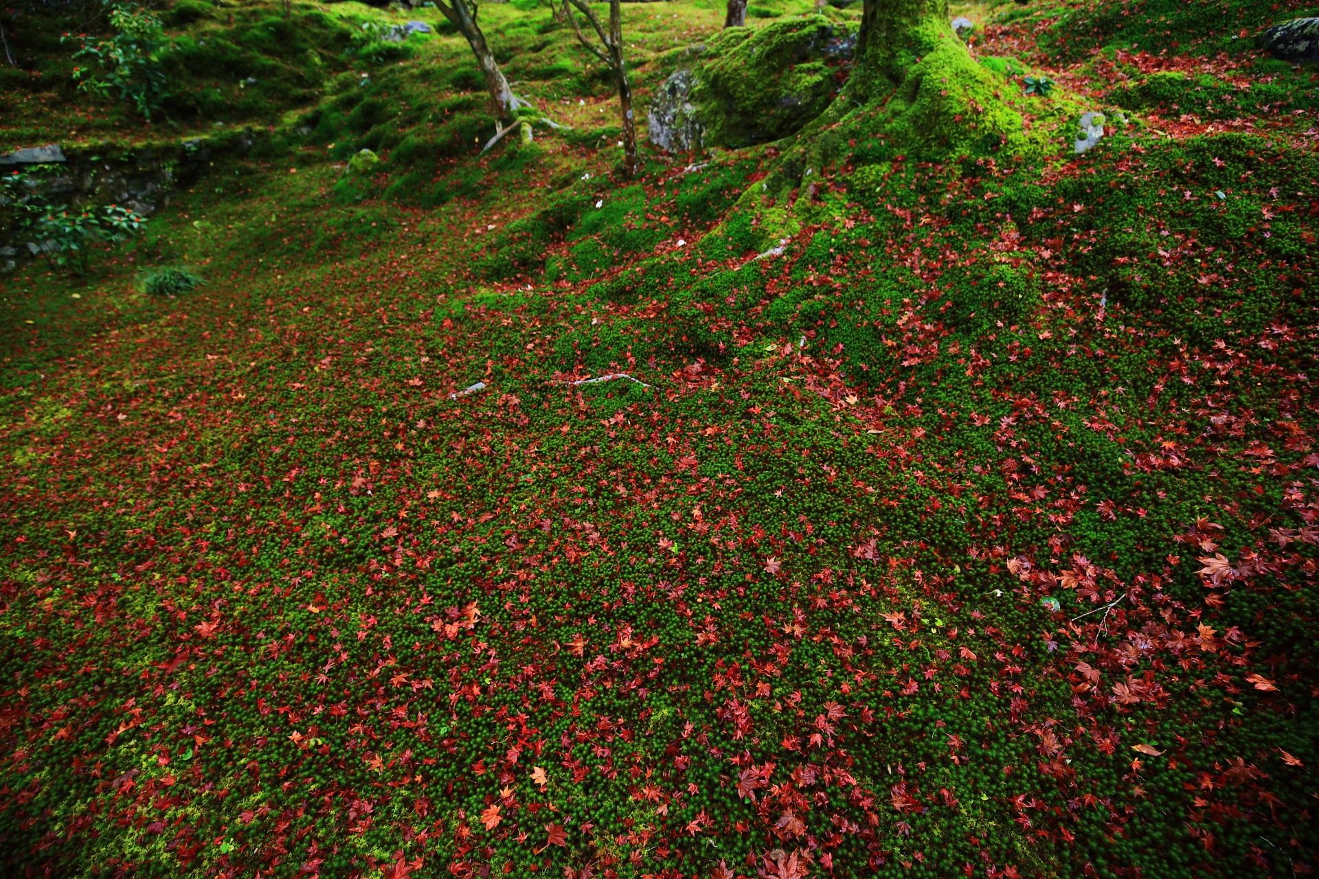 木の根や岩にも育つ綺麗な苔