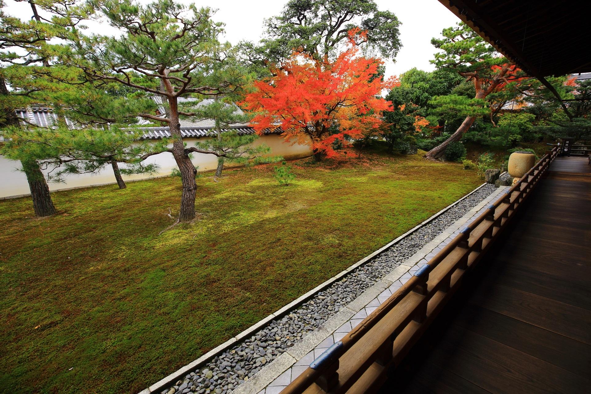 相国寺の方丈西庭の紅葉