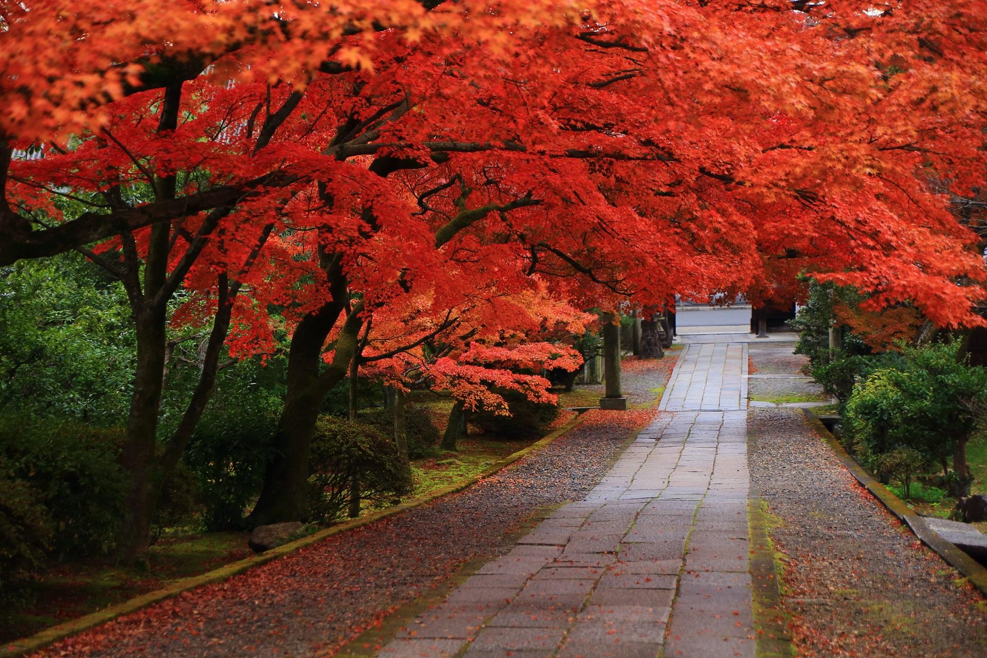緑と石畳を染めるこれ以上ない最高の色づきの紅葉