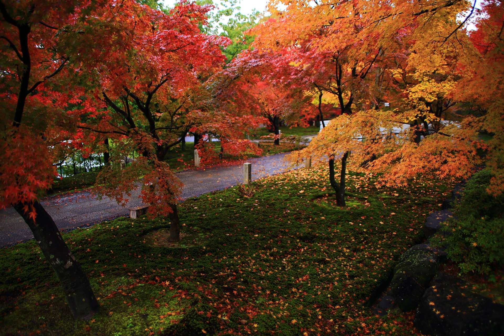 緑の苔を華やぐ赤や黄や橙色などの多彩な紅葉と散りもみじ