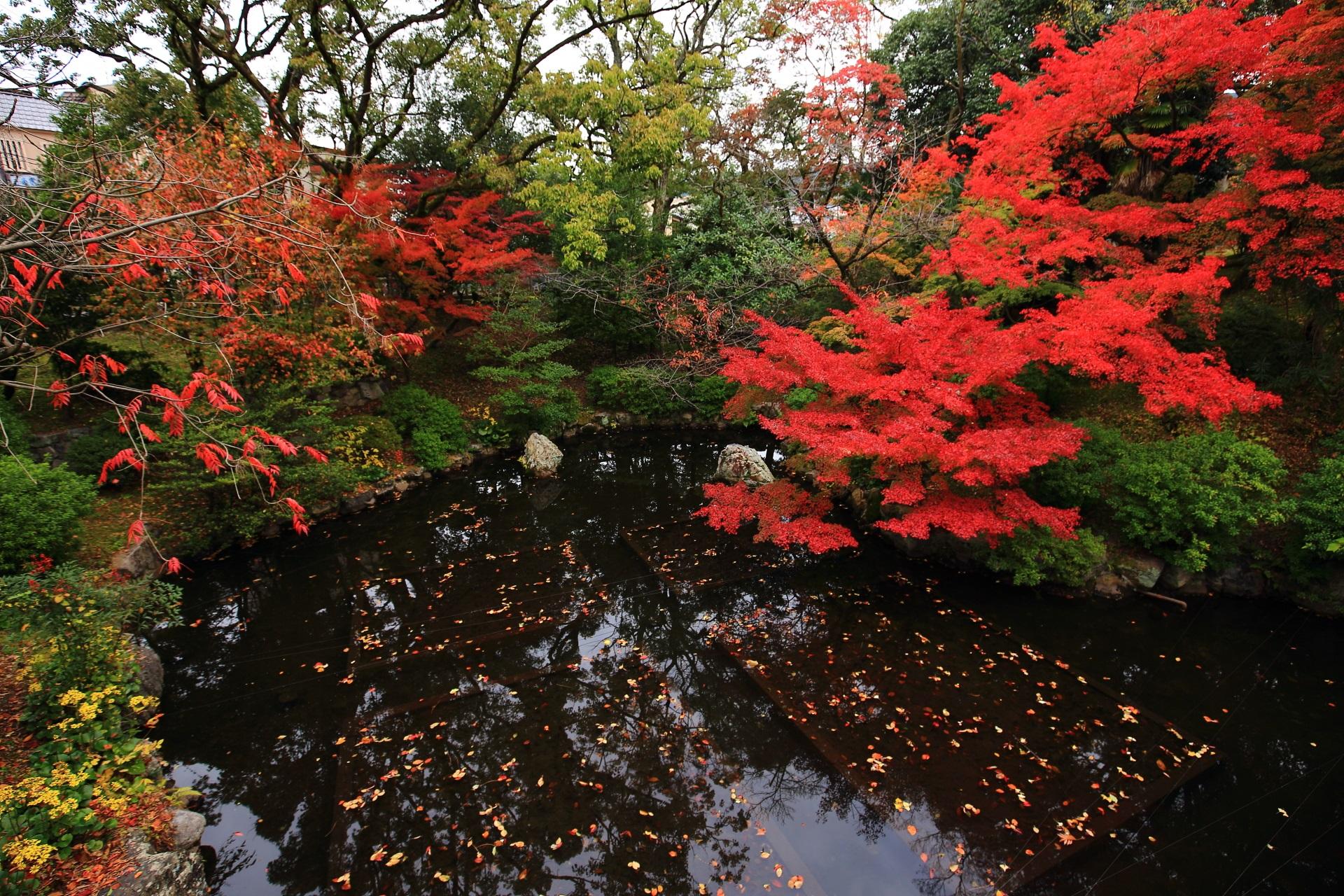 大谷本廟の西の入口にある皓月池(こうげついけ)の紅葉