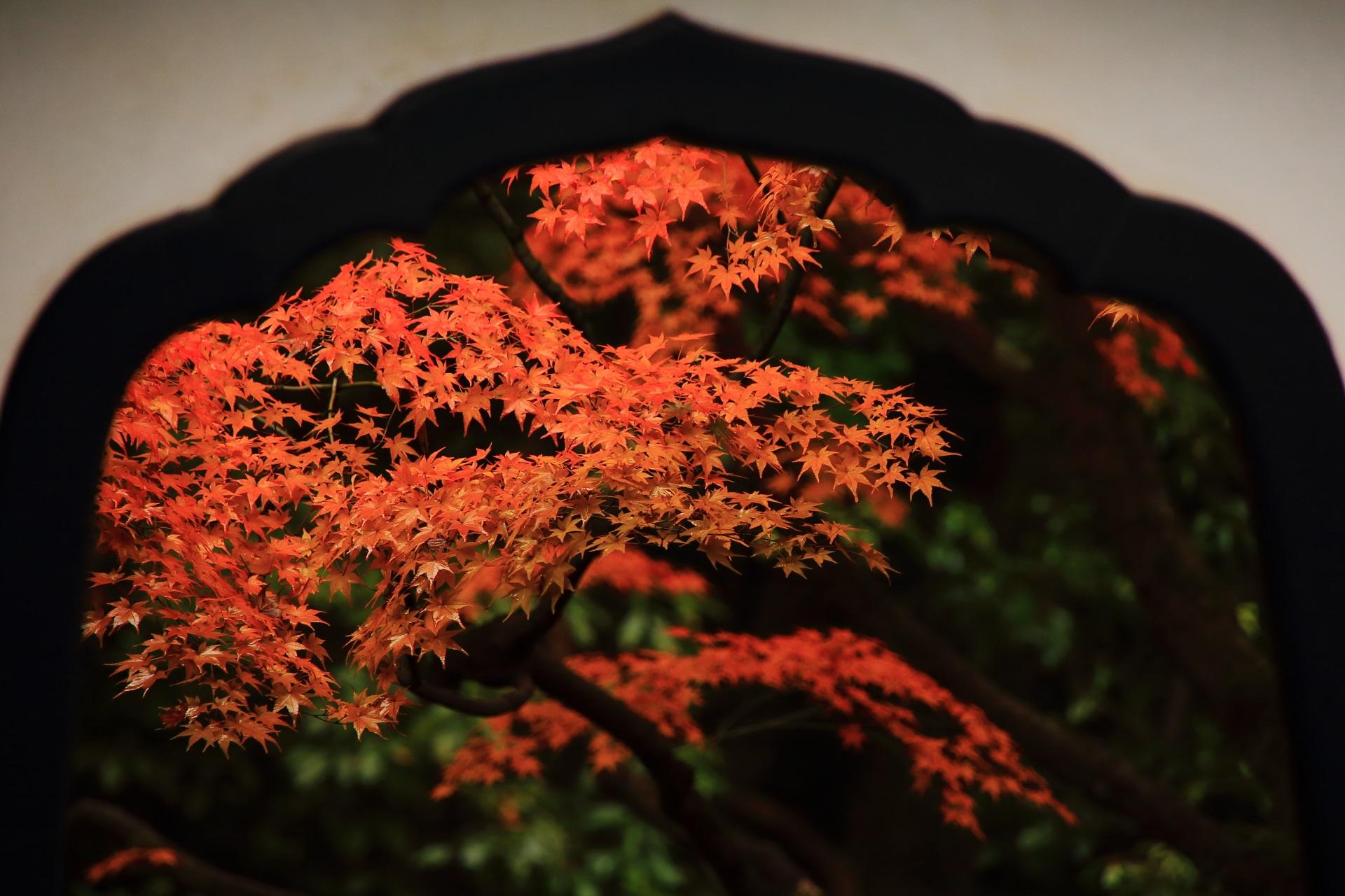 桂春院の絵になる絶品の紅葉
