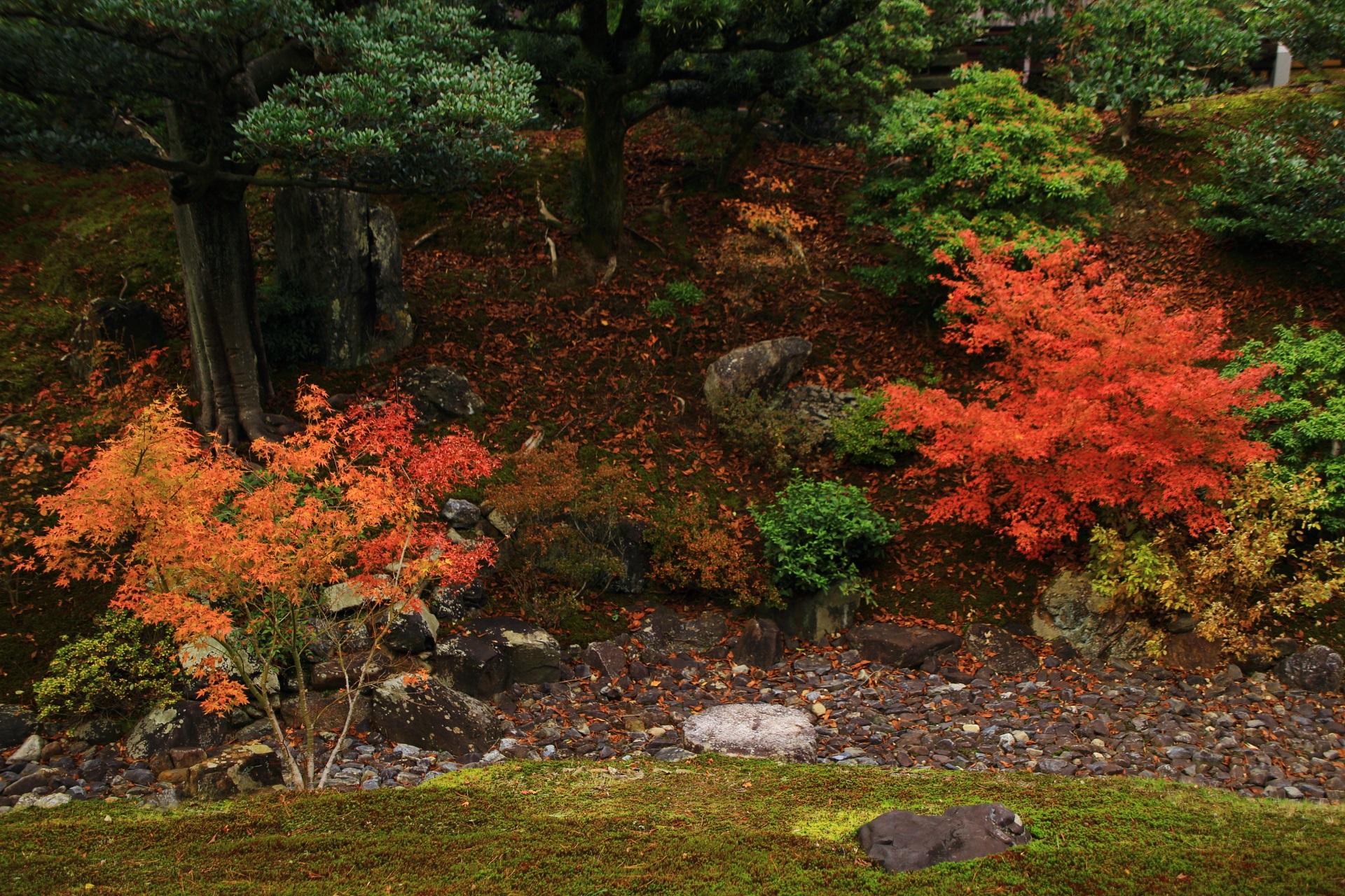 枯流れを彩る紅葉と散りもみじ