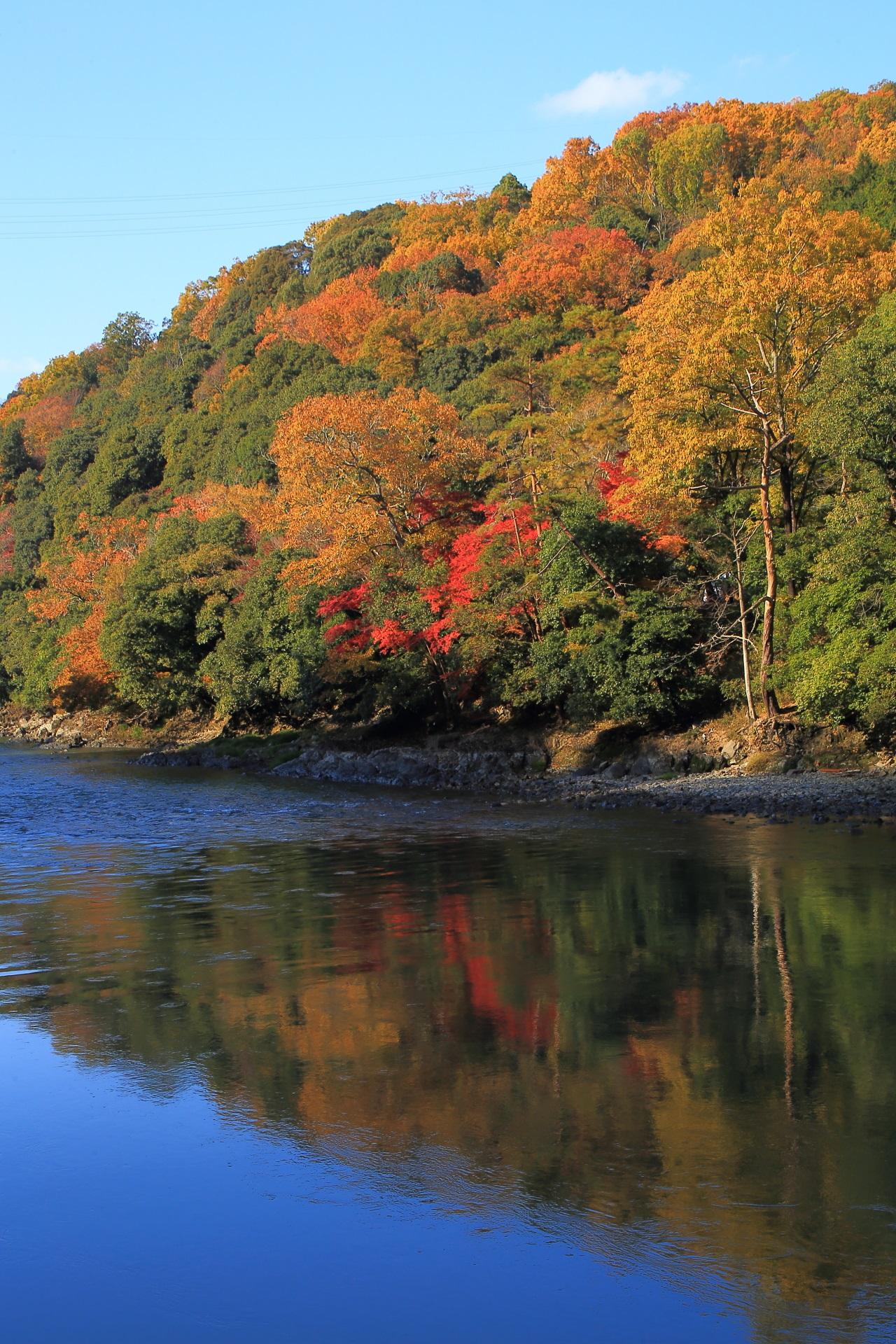 宇治川の煌く紅葉と美しい秋色と青空の水鏡
