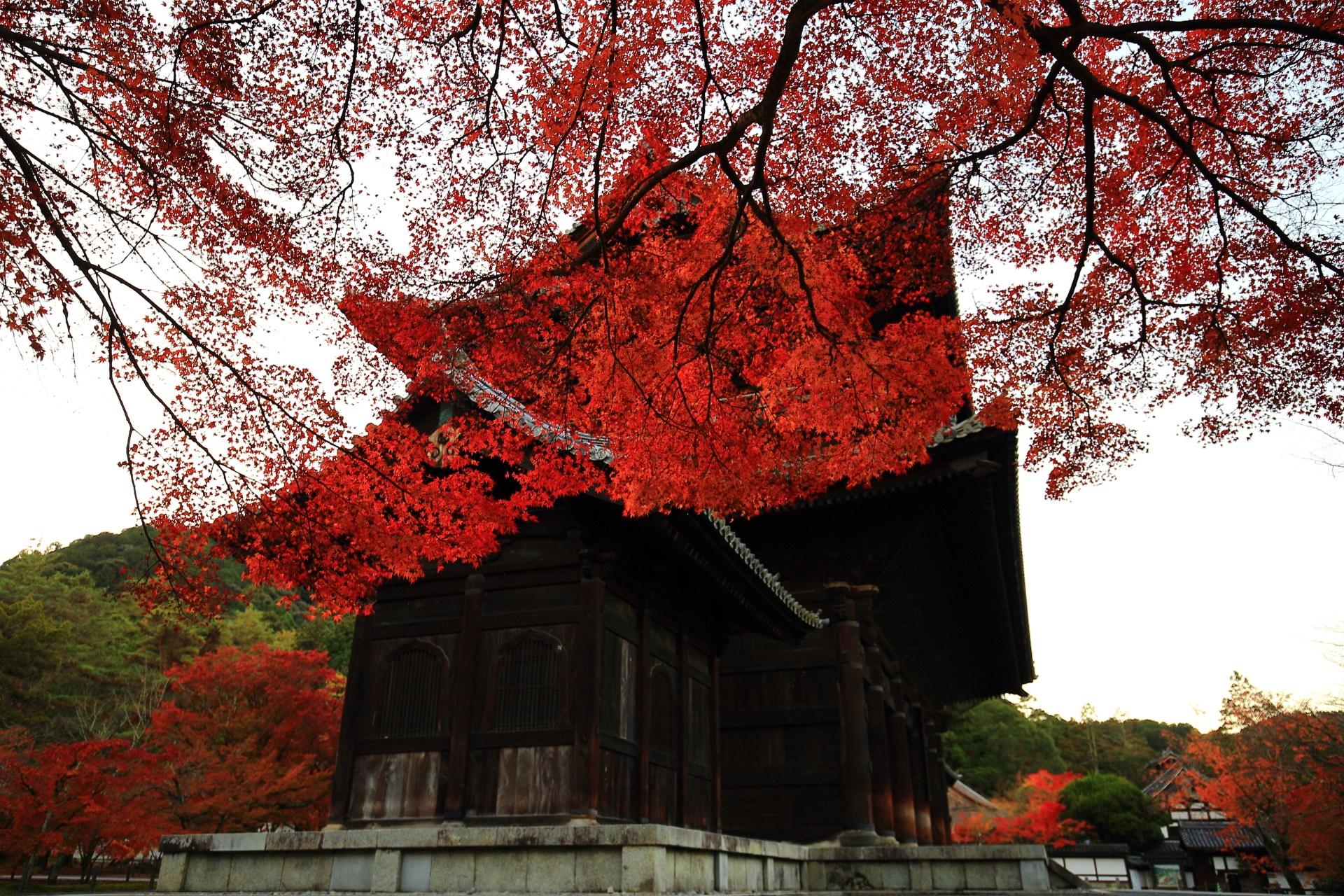 大きな三門を覆う真っ赤な紅葉
