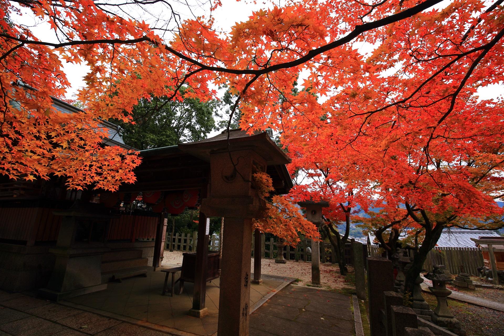 本殿と空をつつむ秋色の紅葉