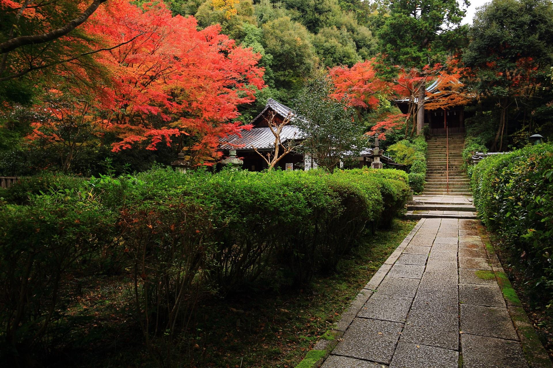 来迎院の鮮やかな紅葉に彩られる本堂と石段の上の荒神堂
