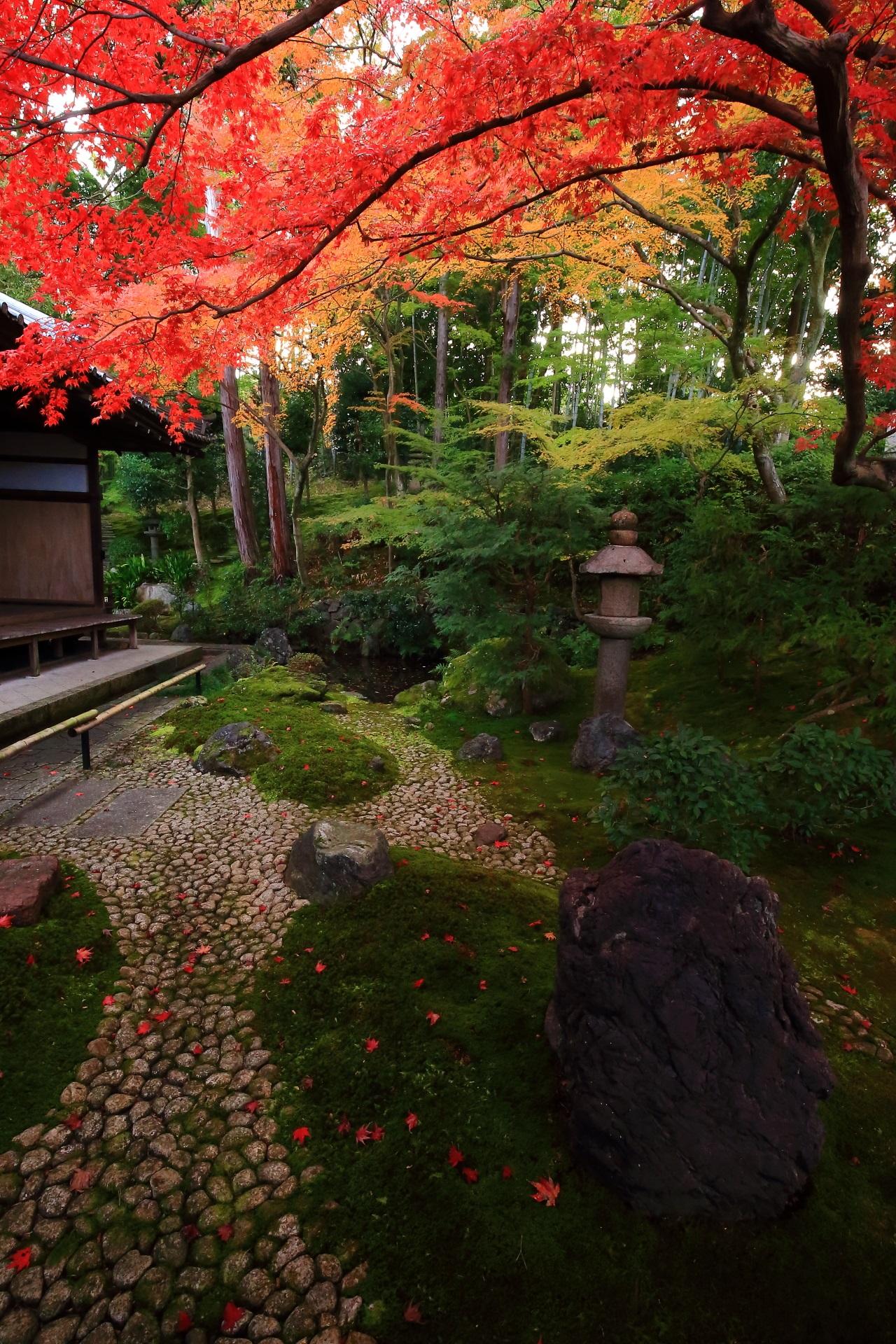 華やかに赤い紅葉が散る緑の苔や岩