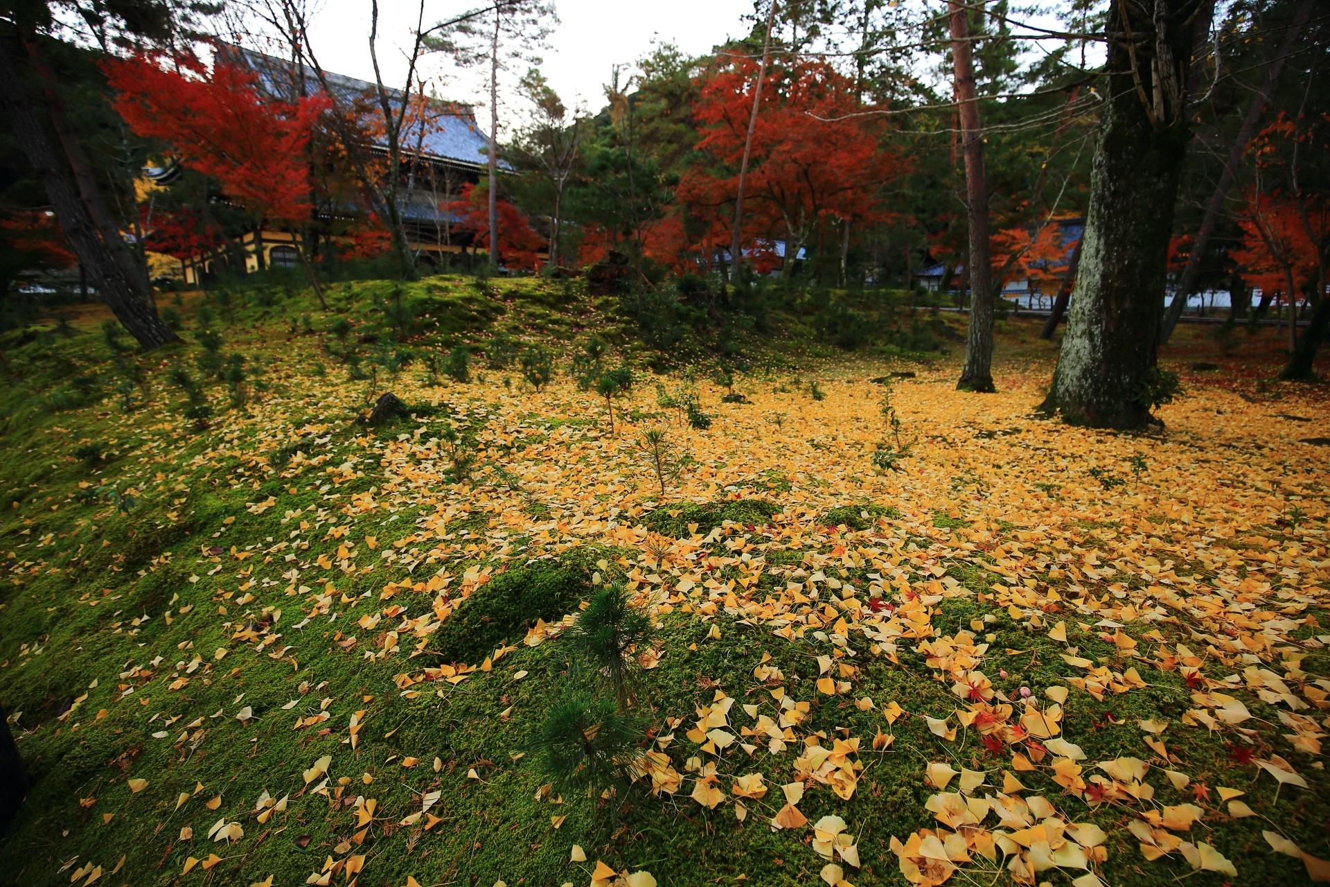 南禅寺の淡い緑の苔を彩る華やかな散り銀杏