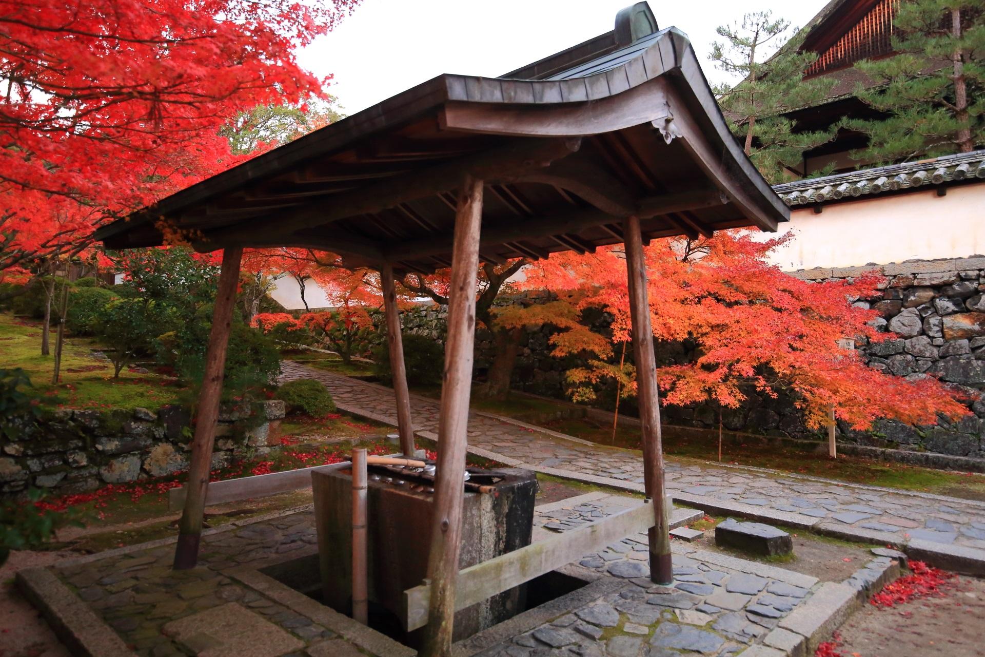 手水舎と紅葉