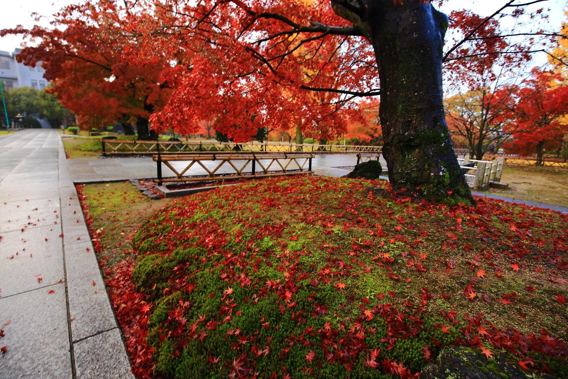 智積院の金堂前の苔を染める鮮やかな赤い散り紅葉