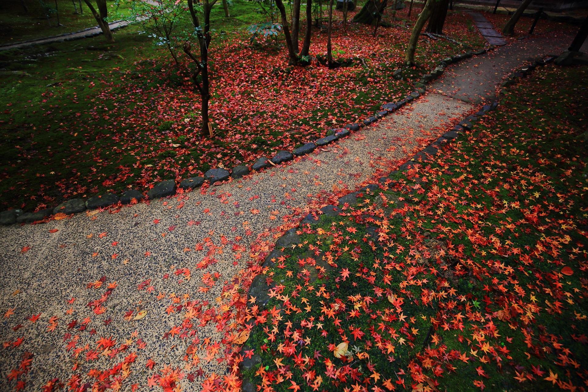 霊鑑寺の素晴らしい散り紅葉と美しい晩秋の情景