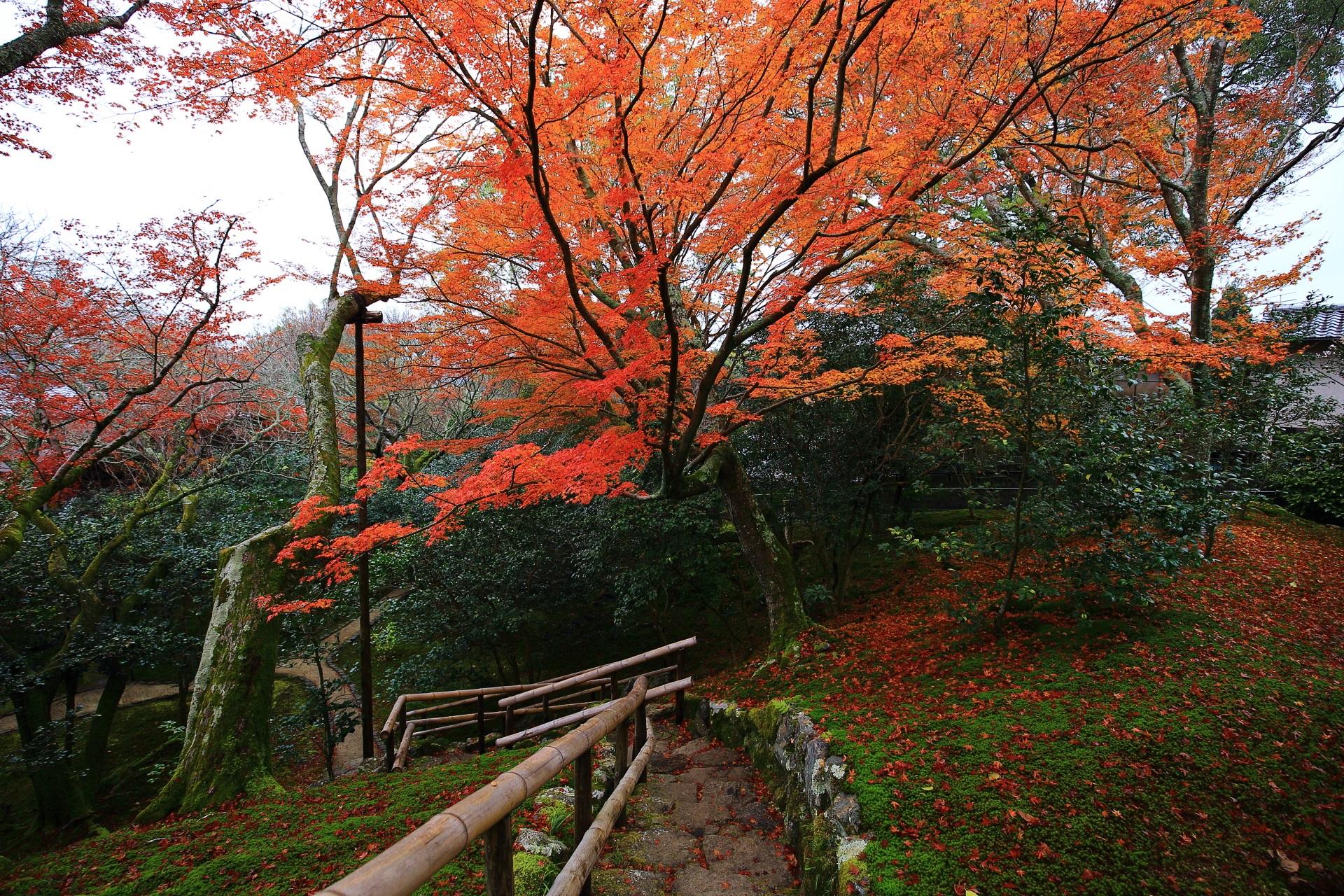 霊鑑寺の高くなっている東側から西側へ降りる石段と雄大な紅葉
