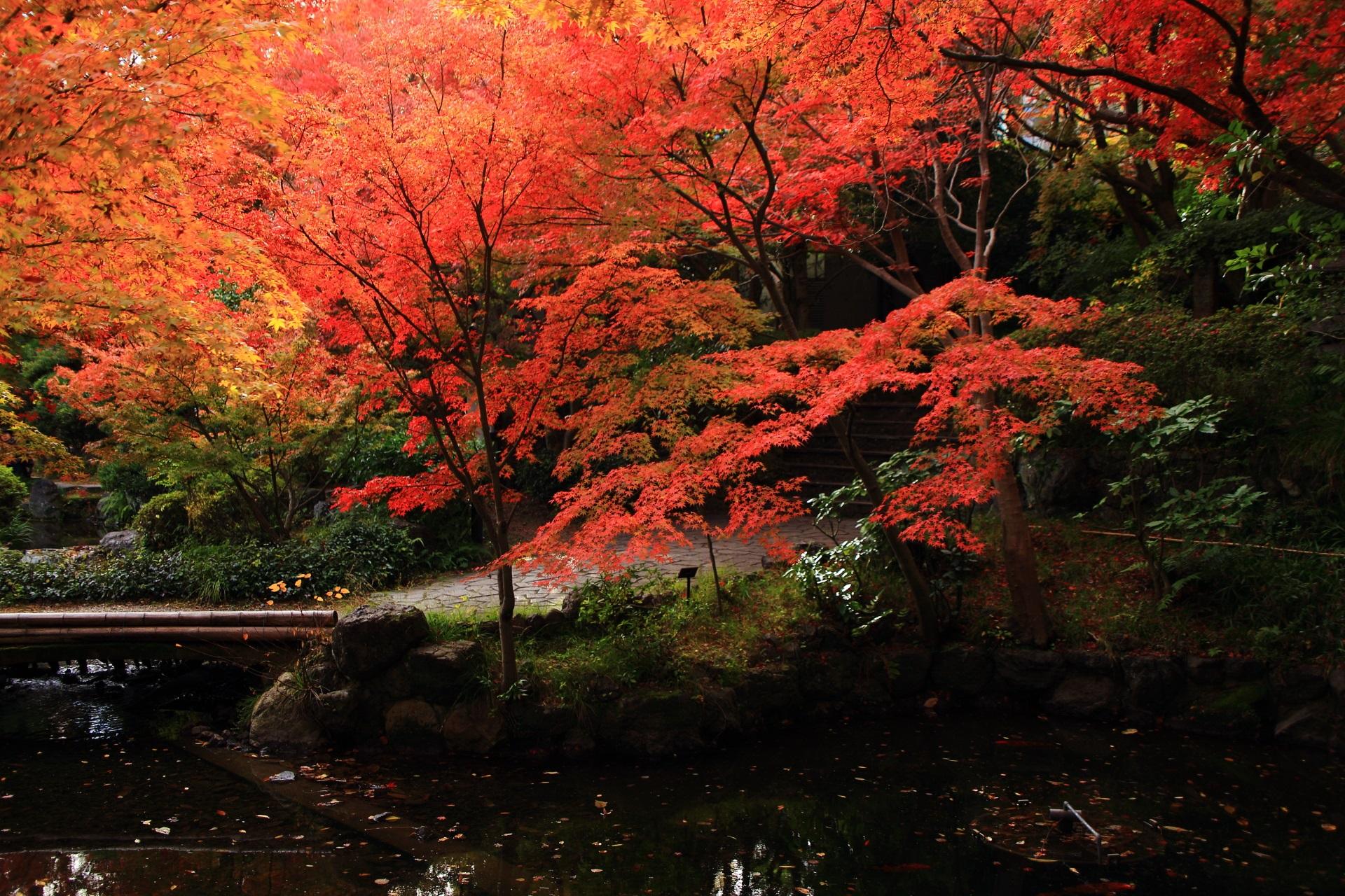 水辺を彩る深く濃い色合いの紅葉