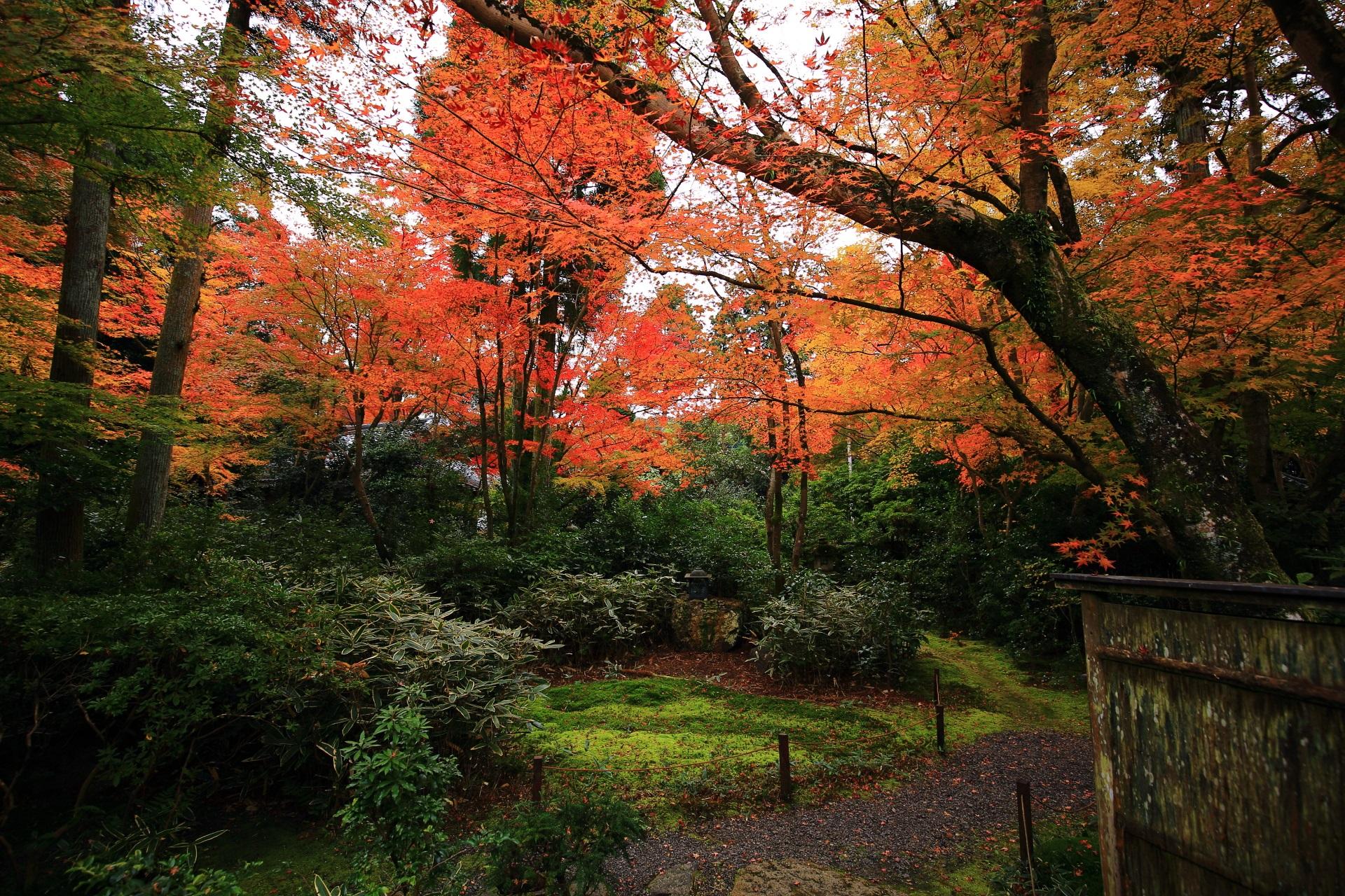 煌びやかな紅葉に彩られる静かな含翆庭